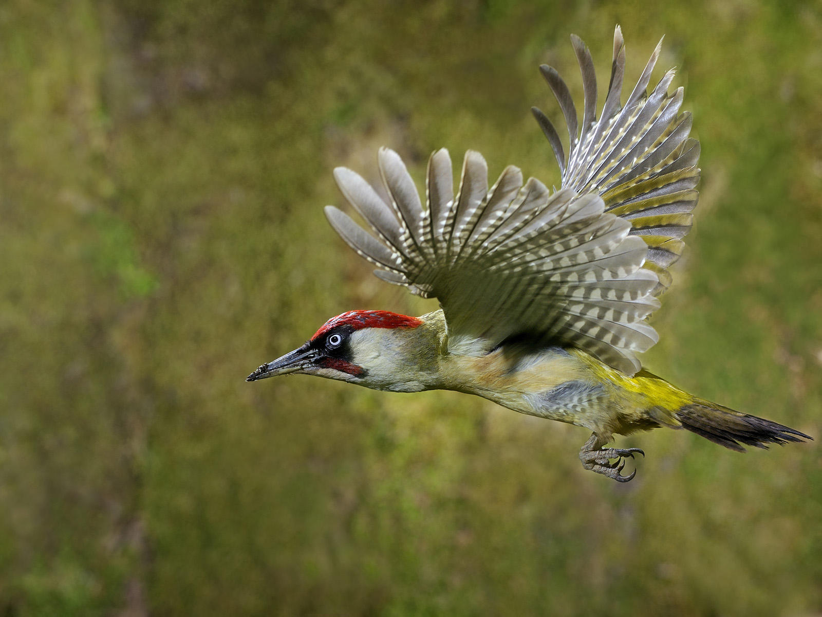 awesome woodpecker pictures 39722