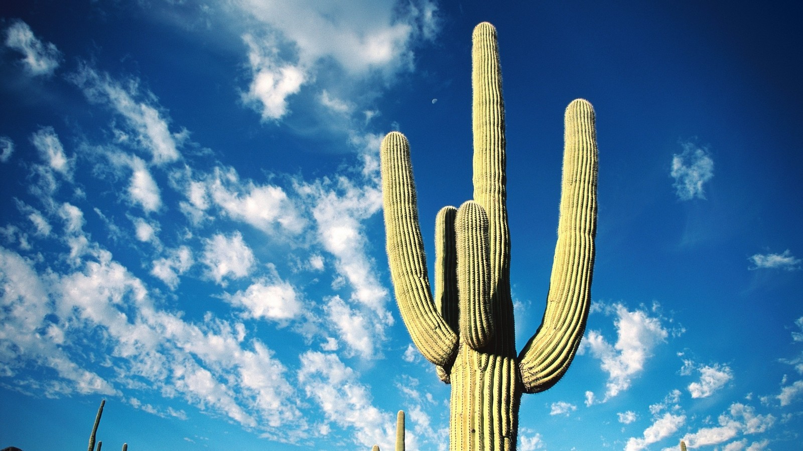 beautiful cactus wallpaper 16612