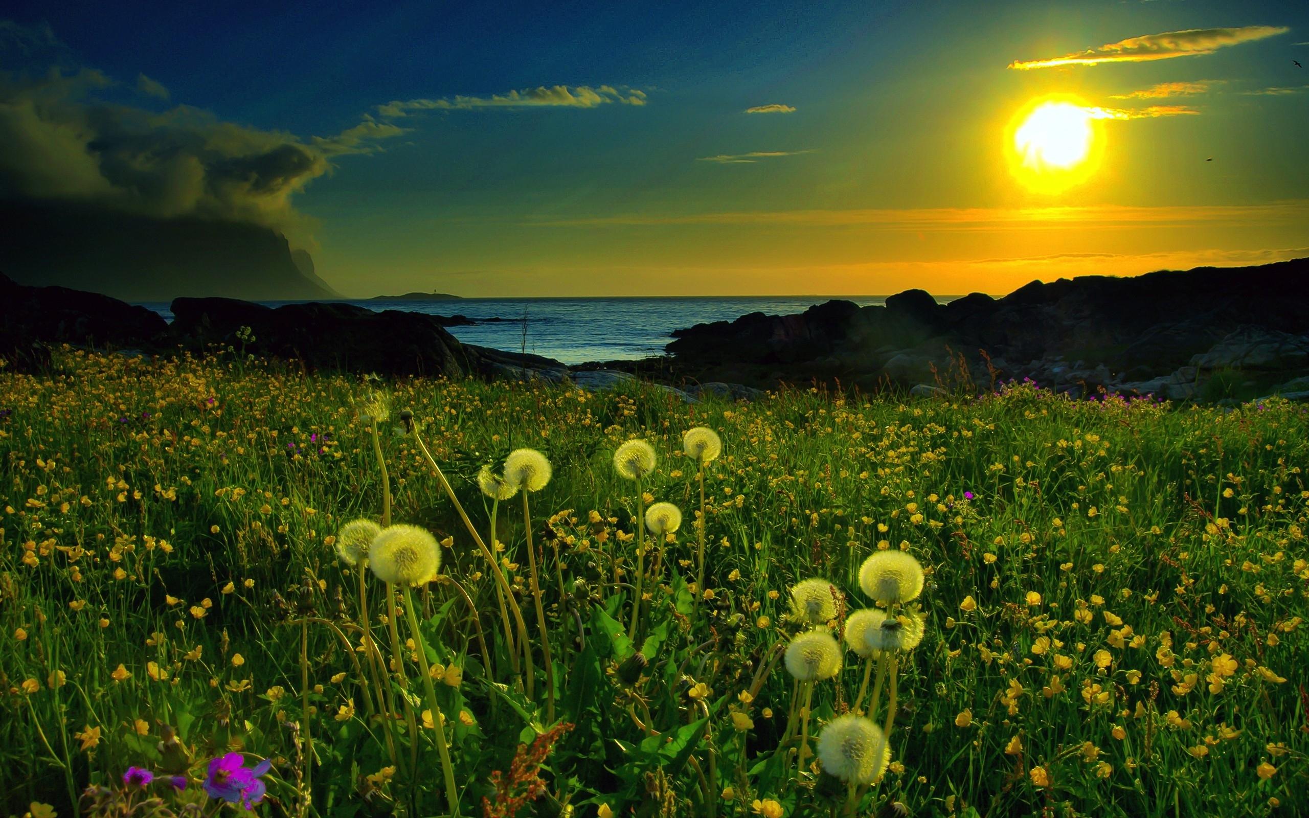 beautiful meadow 29587