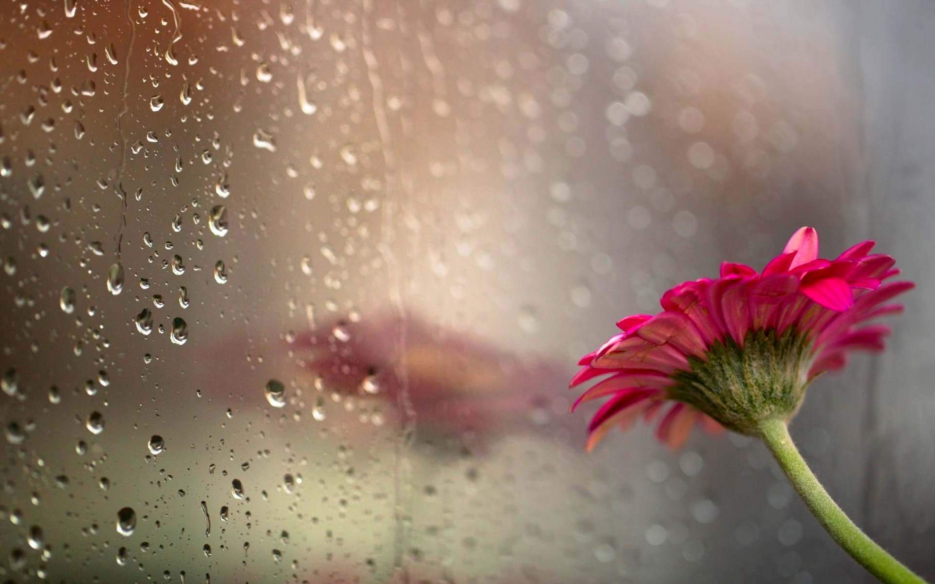 beautiful rain wallpaper 39849