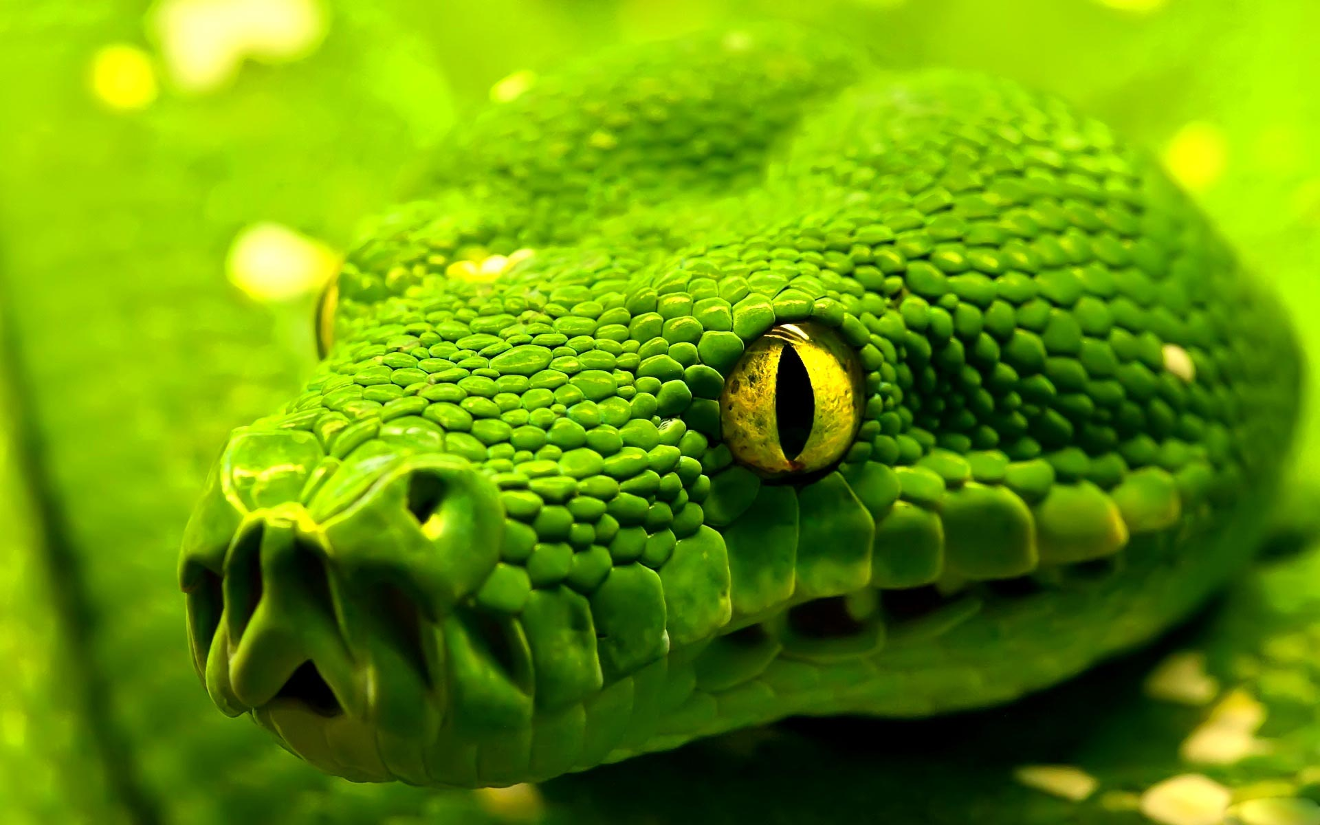 beautiful snake wallpaper 29854