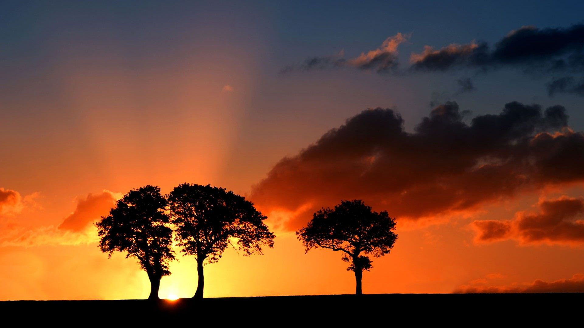 beautiful tree silhouette 34135