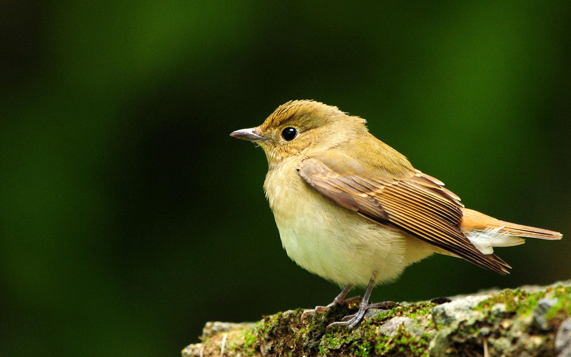 bird wallpaper 9280