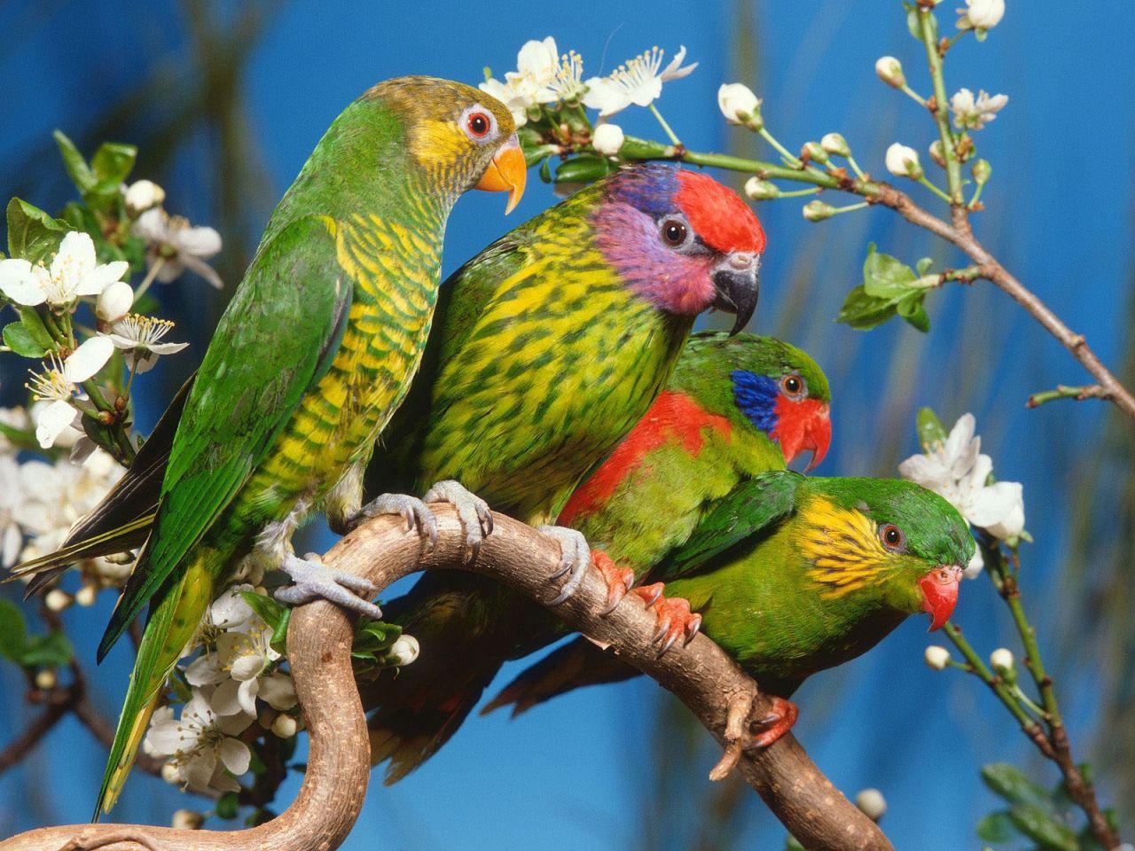 bird wallpaper 9293