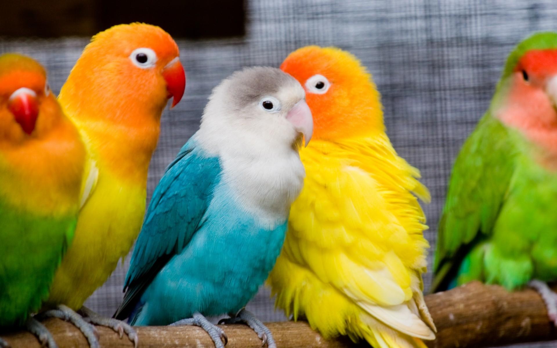 Bird Wallpaper 9297 1920x1200 px HDWallSourcecom