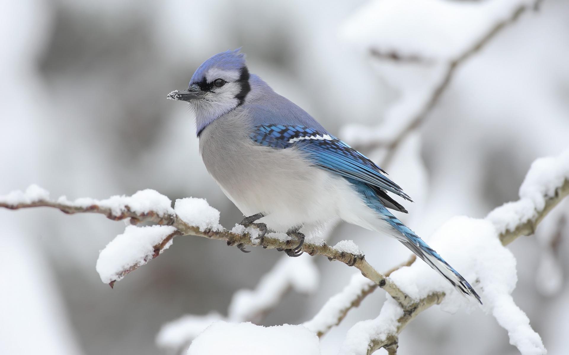 bird wallpaper 9301