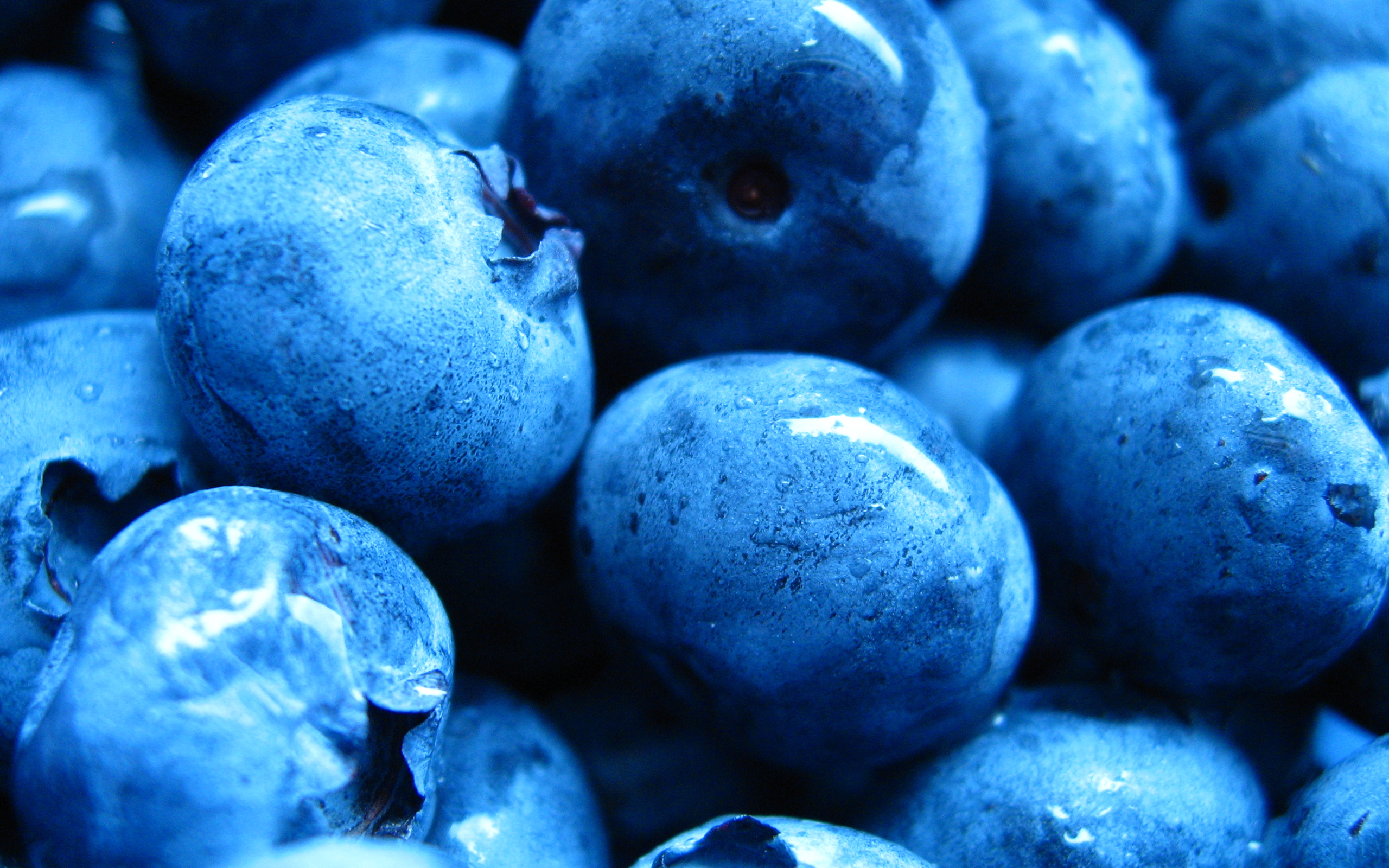 blueberries 20404