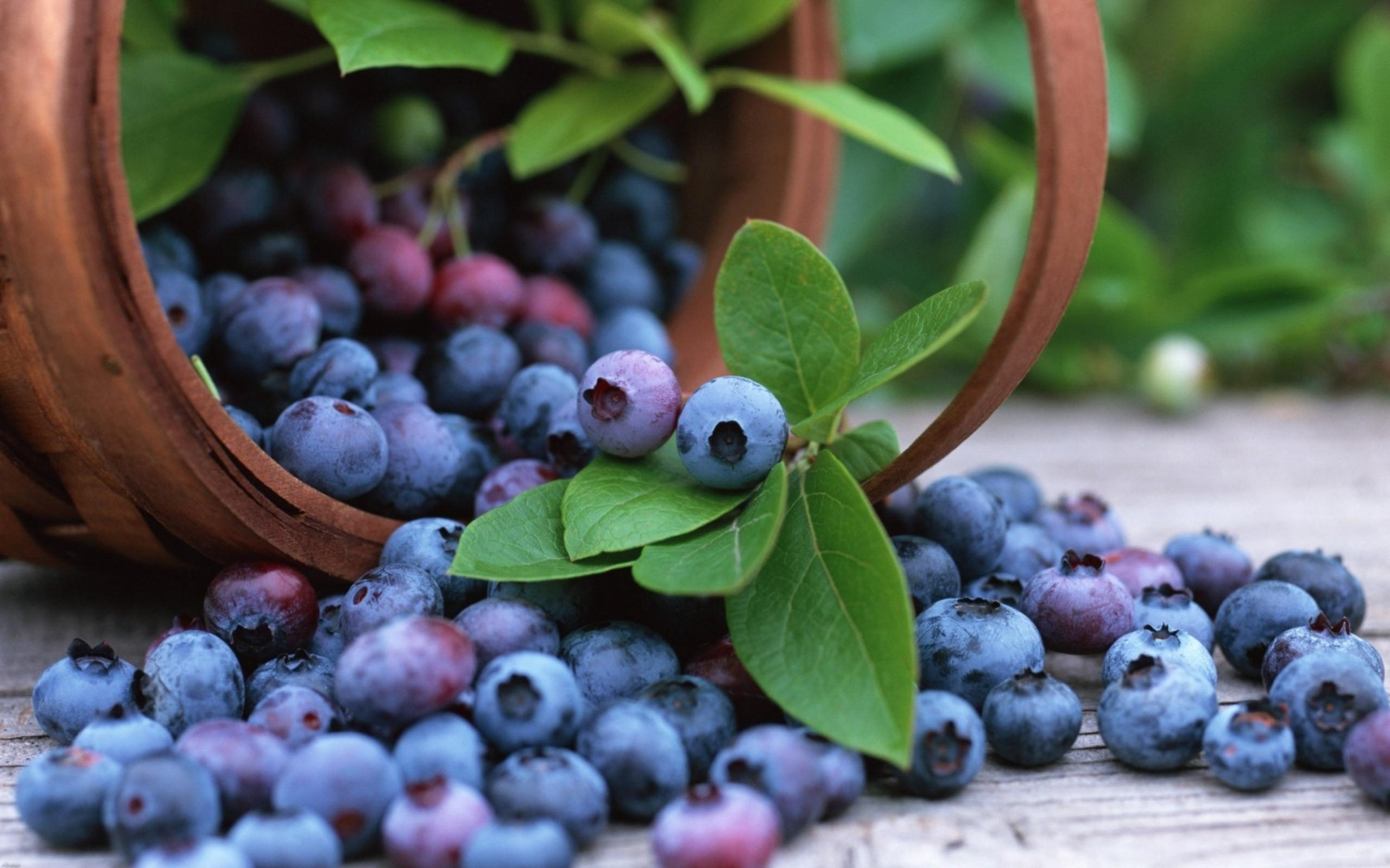 blueberries 20406