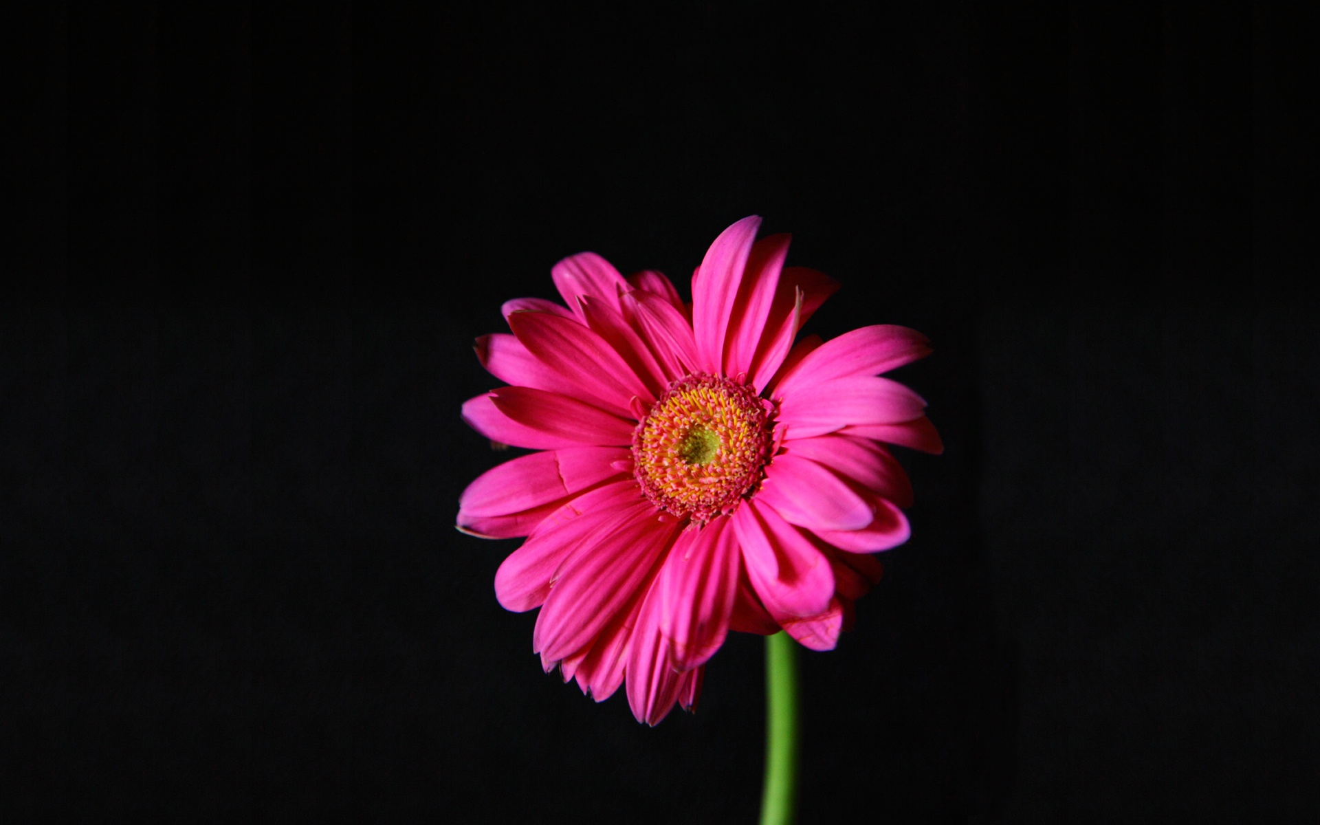 bright pink flowers 27826