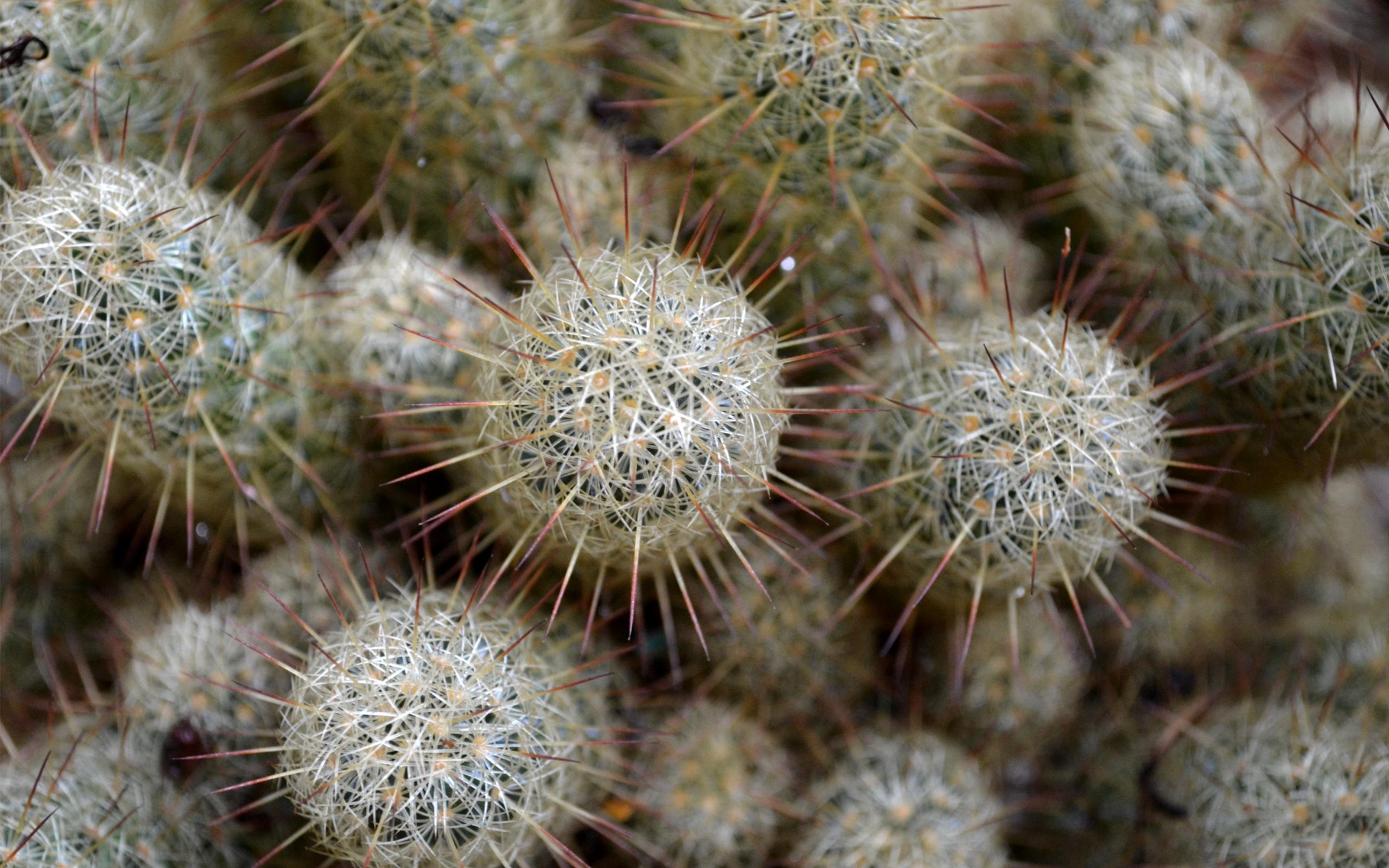 cactus wallpaper 16609