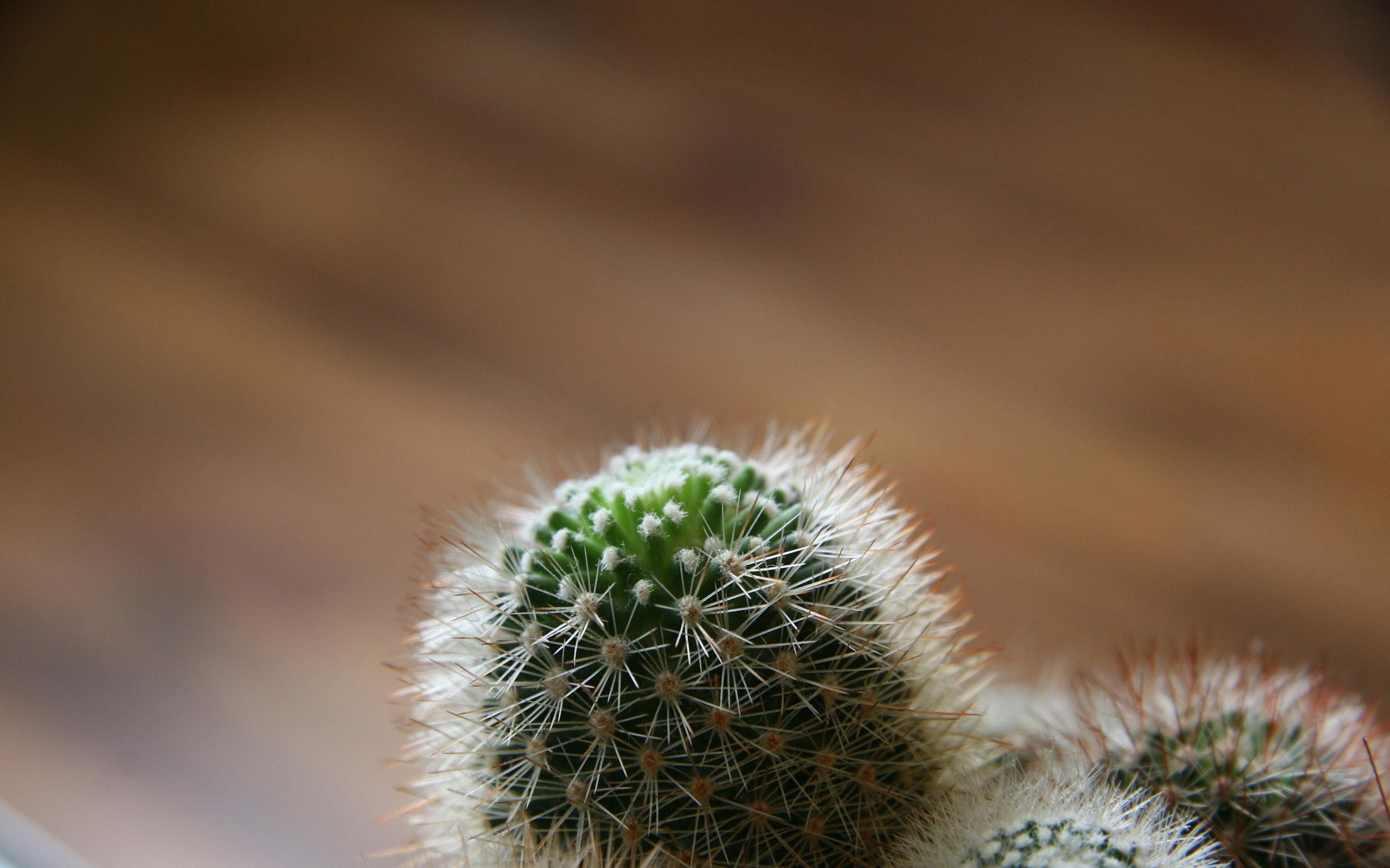 cactus wallpaper 16611