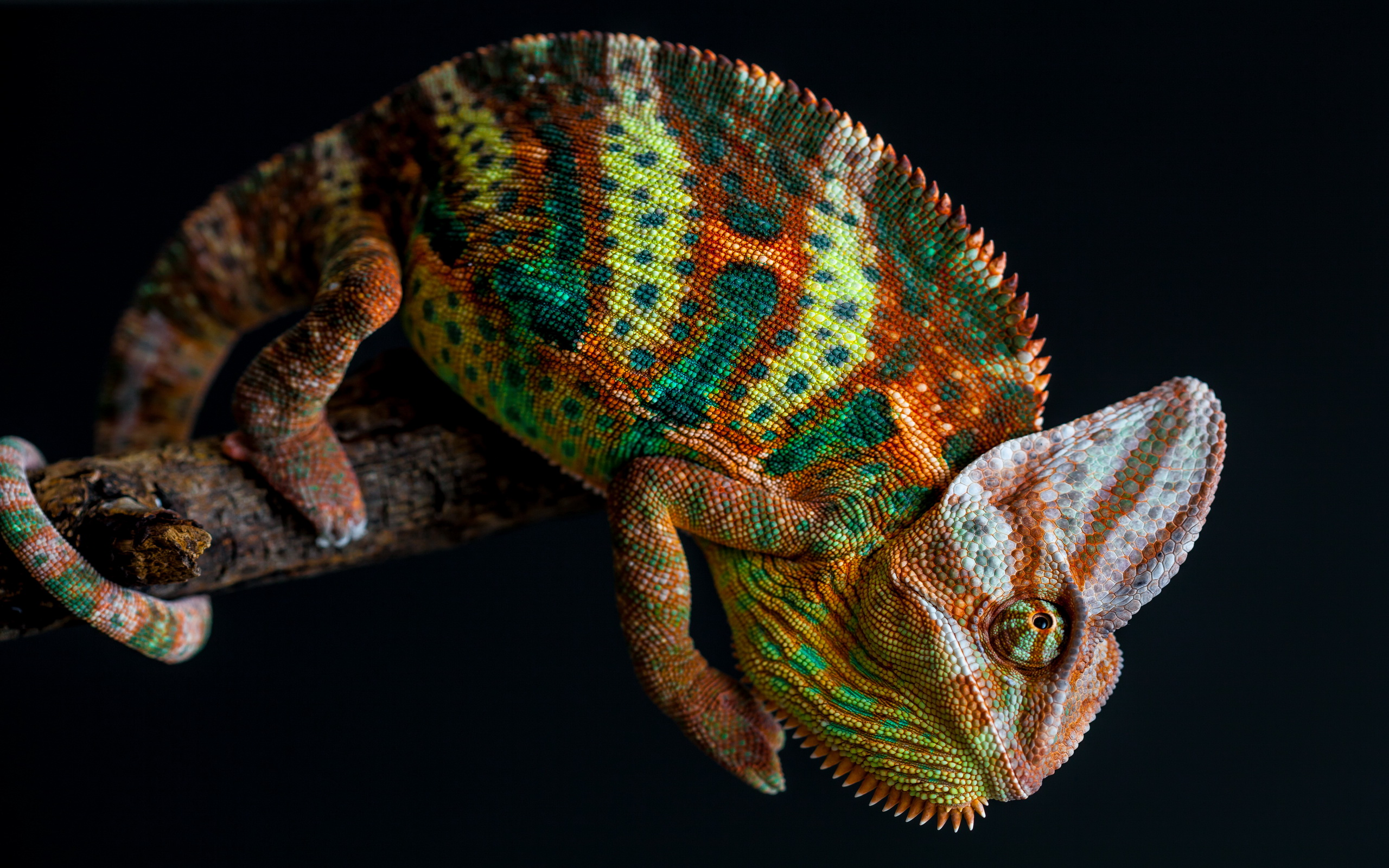 chameleon wallpaper 23629