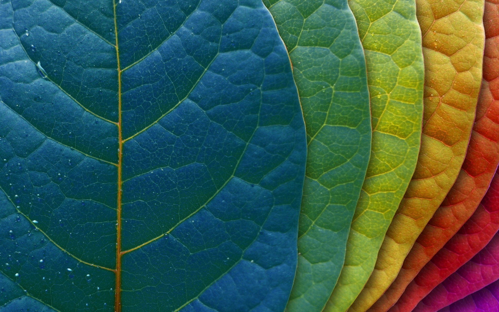 colorful leaves 30071