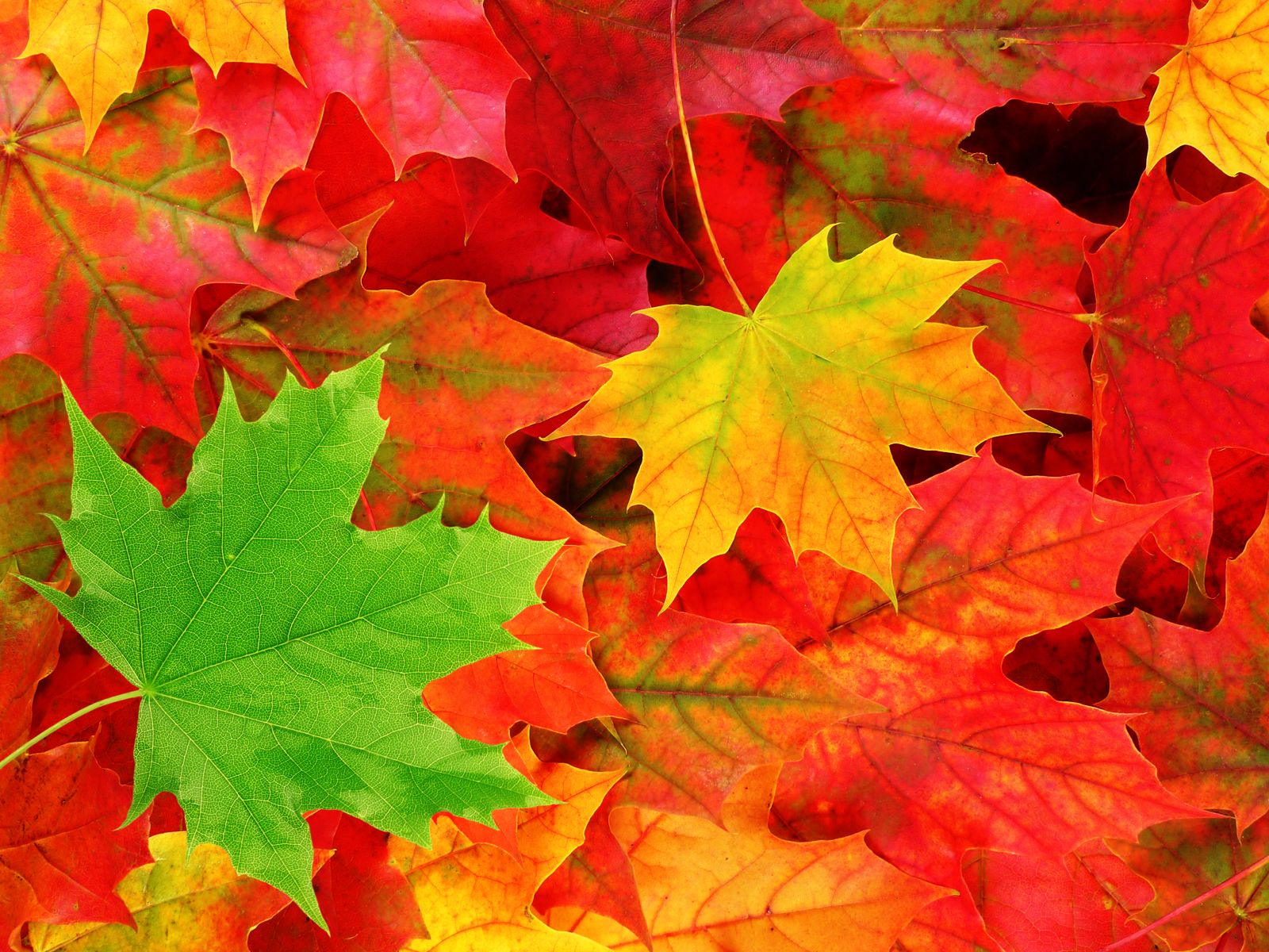 colorful leaves 30078