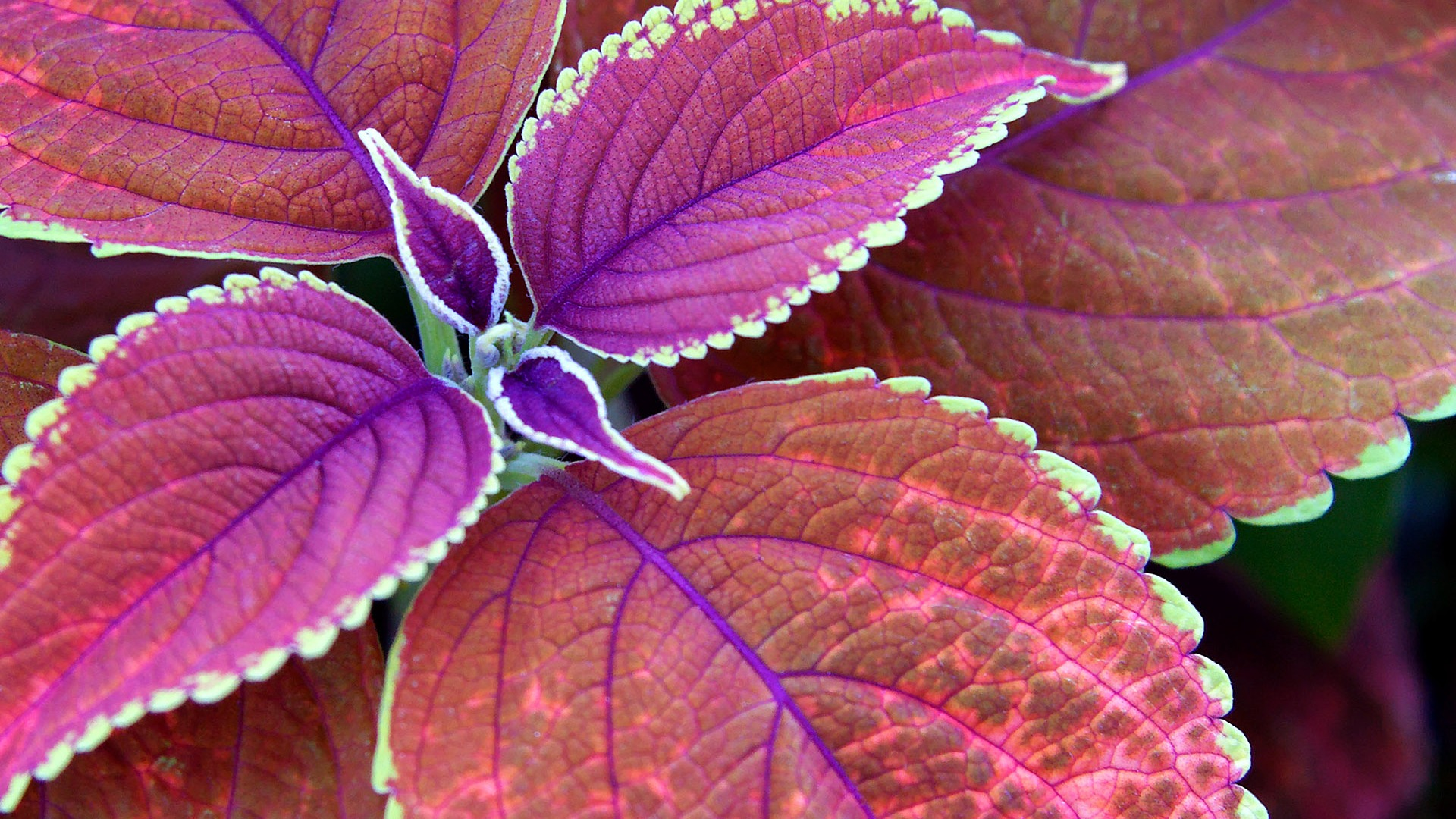 colorful leaves 30085