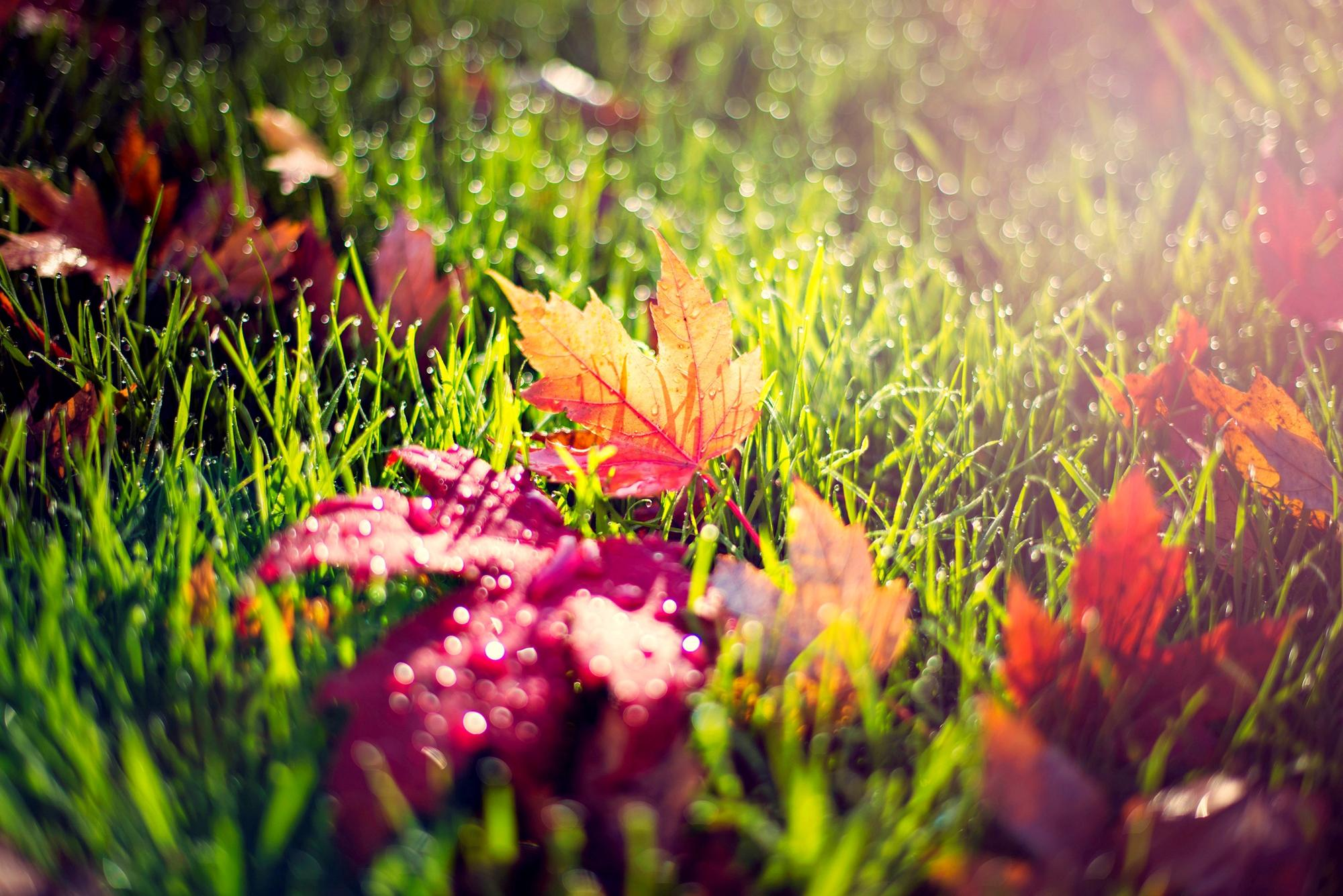 colorful leaves picture 30076