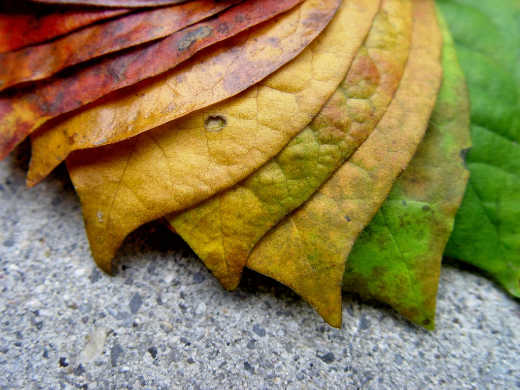 colorful leaves pictures 30084