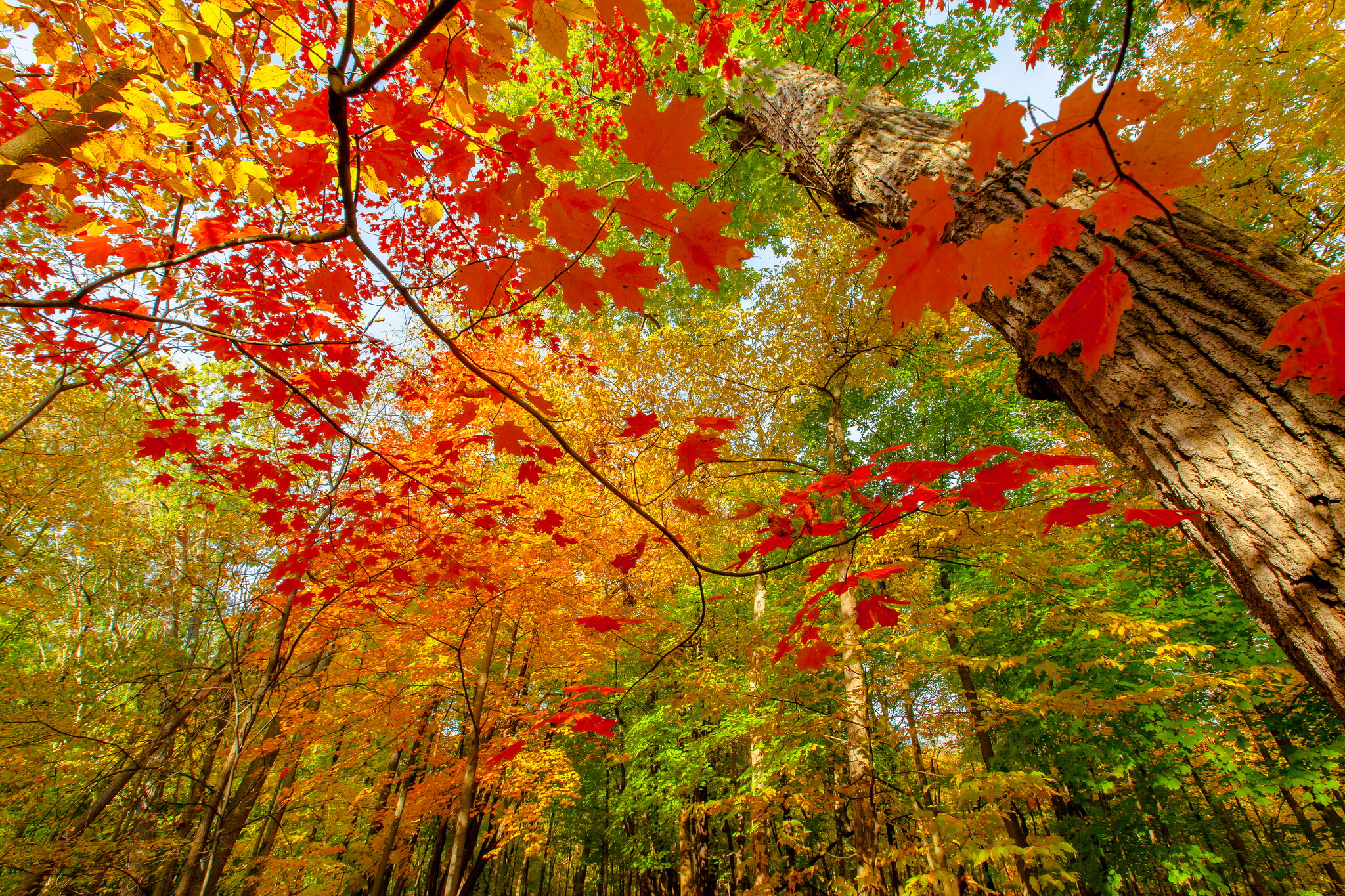 colorful leaves wallpaper 30079