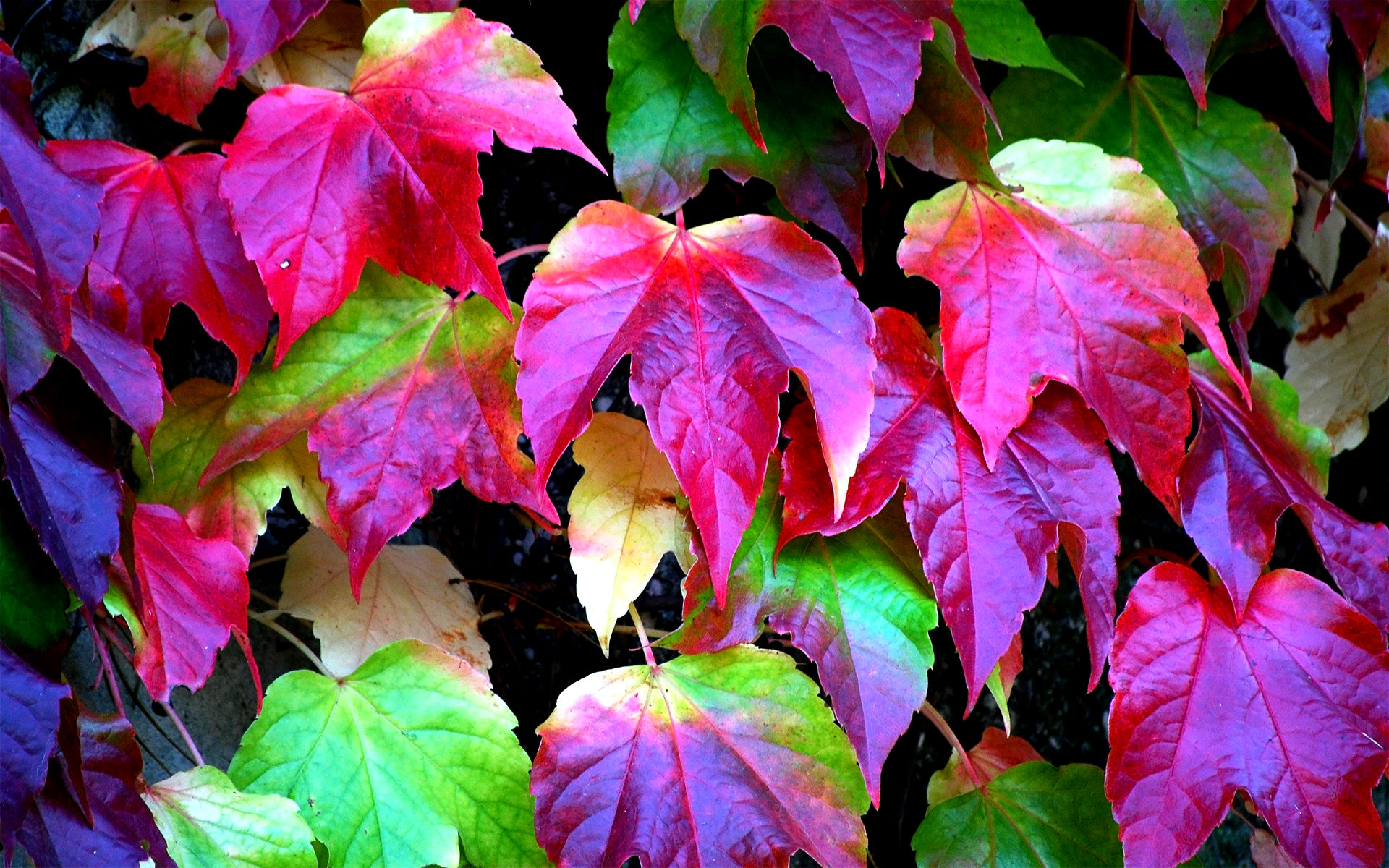 colorful leaves wallpaper 30088