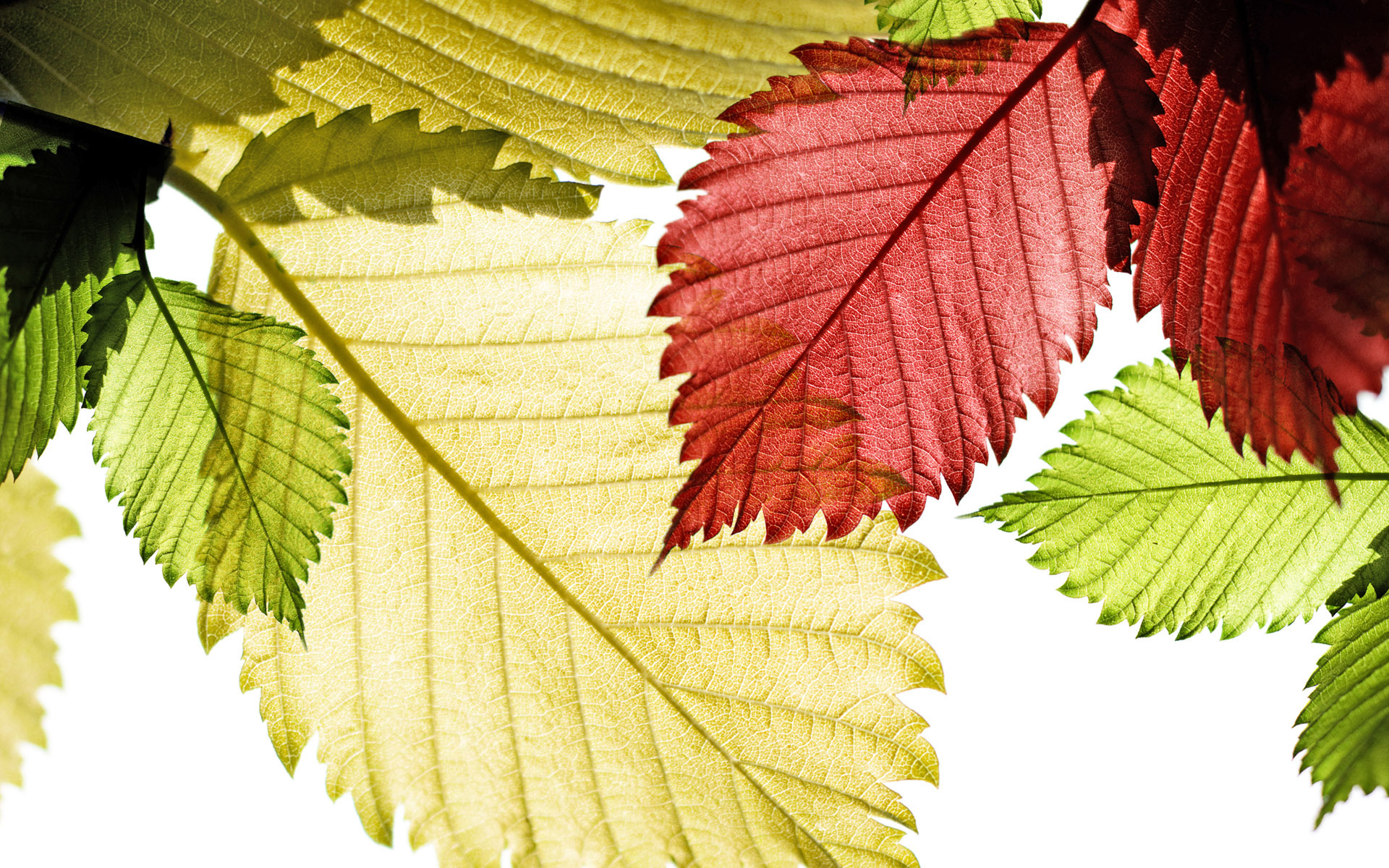 colorful leaves wallpaper 30090