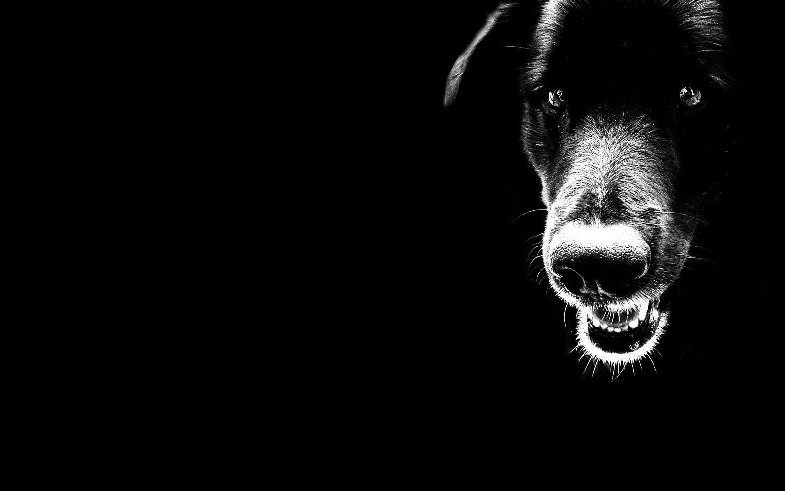cool black backgrounds 18246
