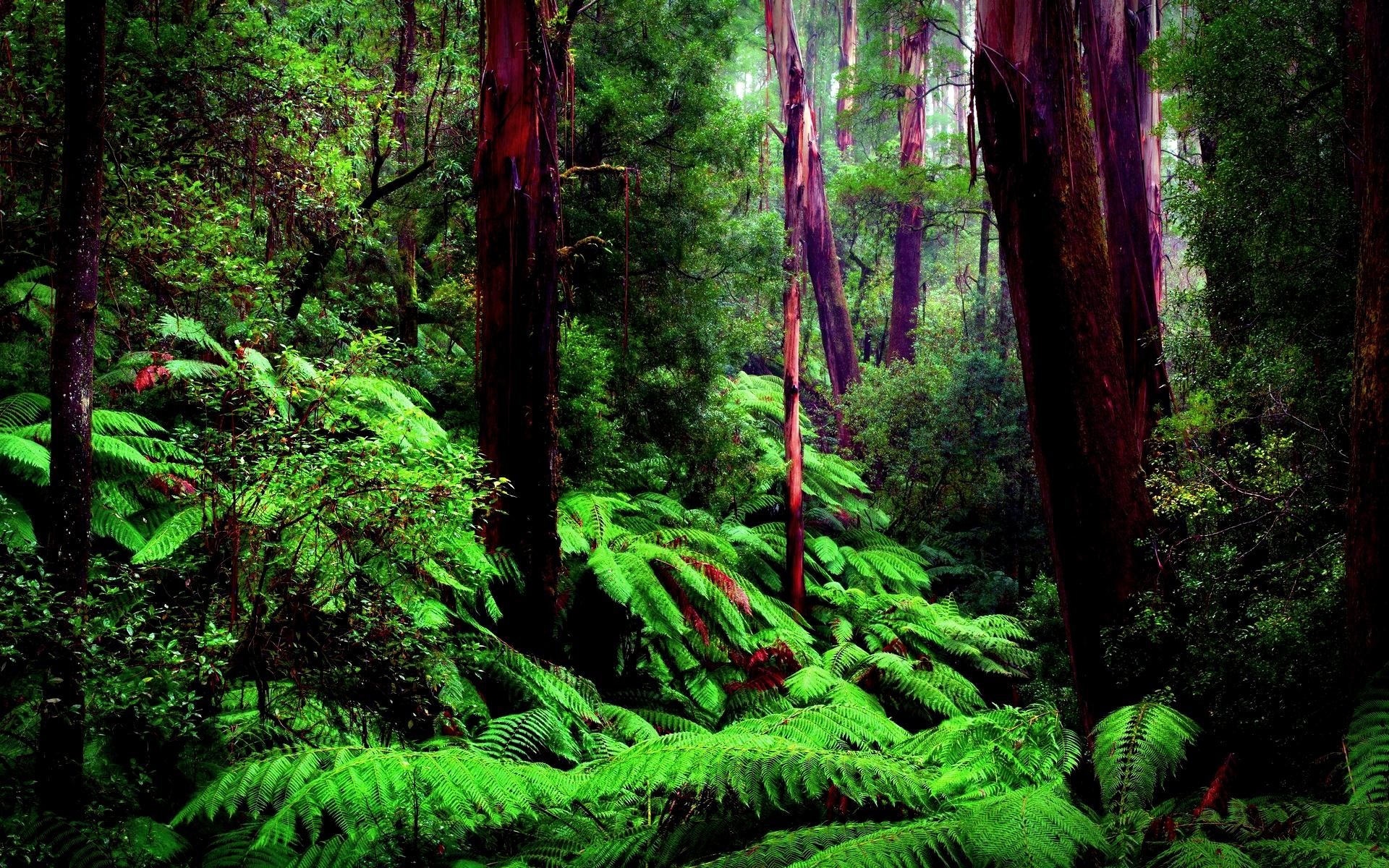 cool rainforest wallpaper 24484