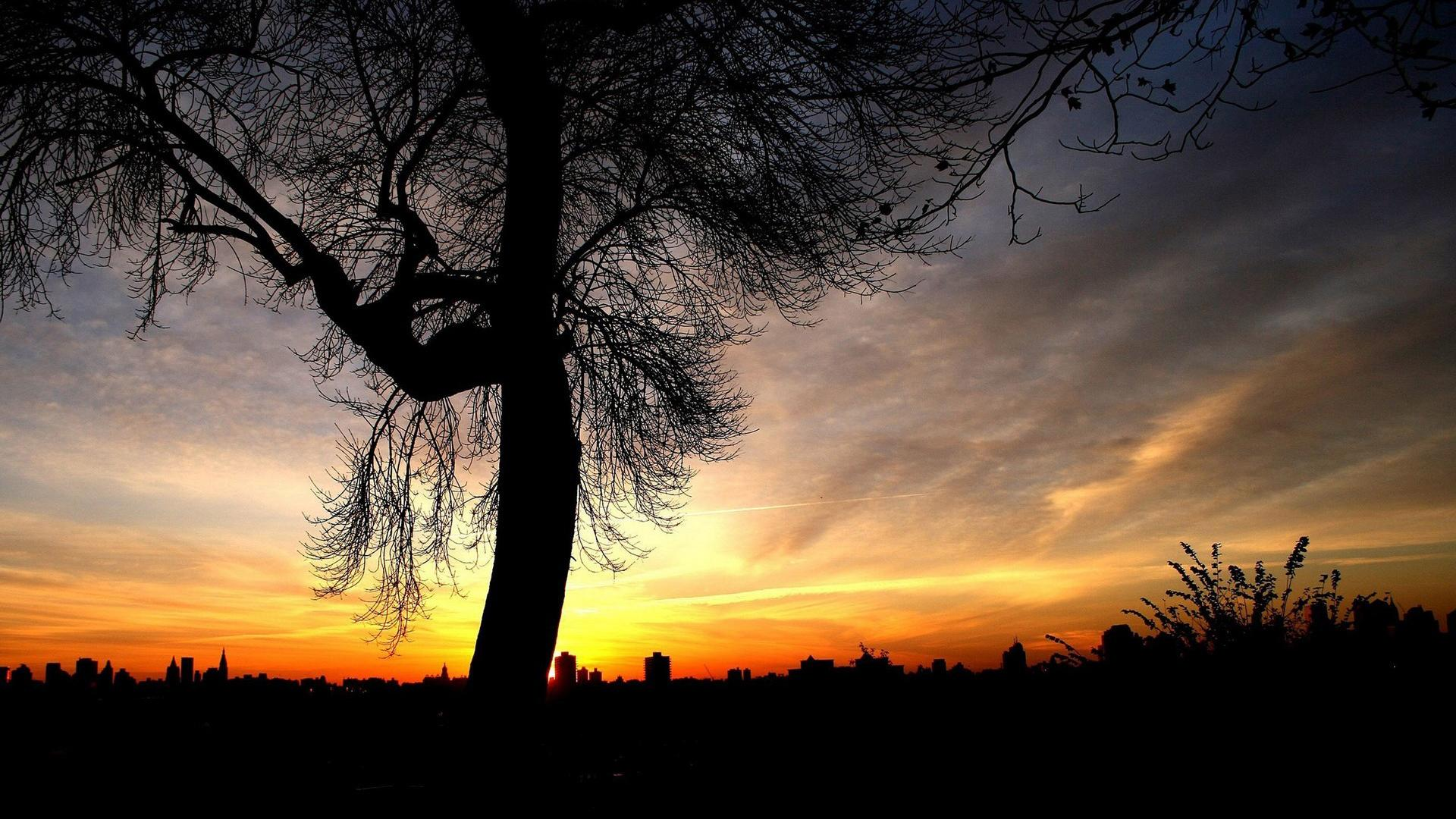 cool tree silhouette wallpaper 34132