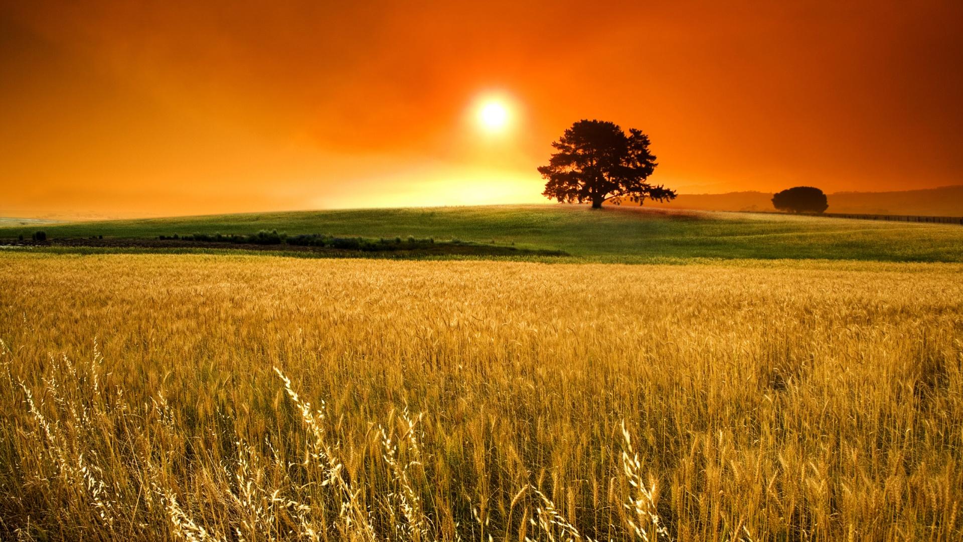 cornfield 21314