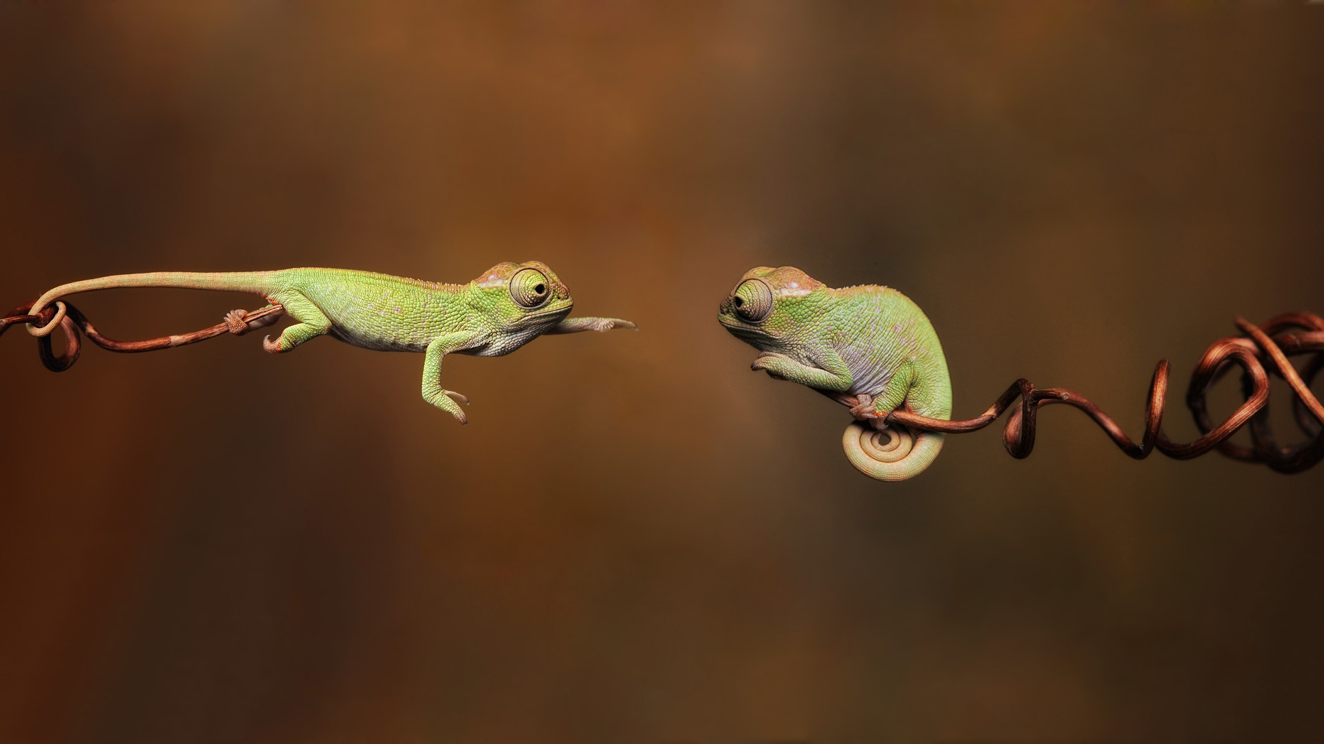cute chameleon wallpaper 23640