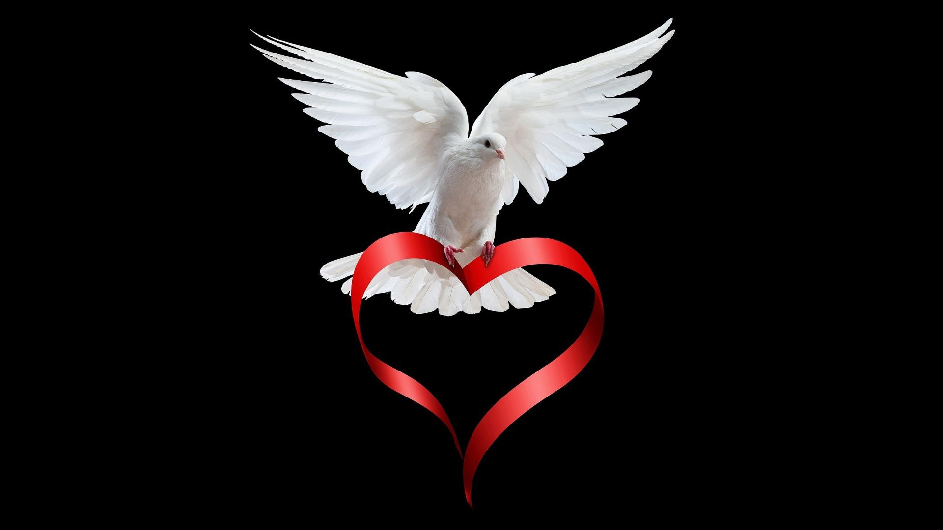 cute dove wallpaper 35347