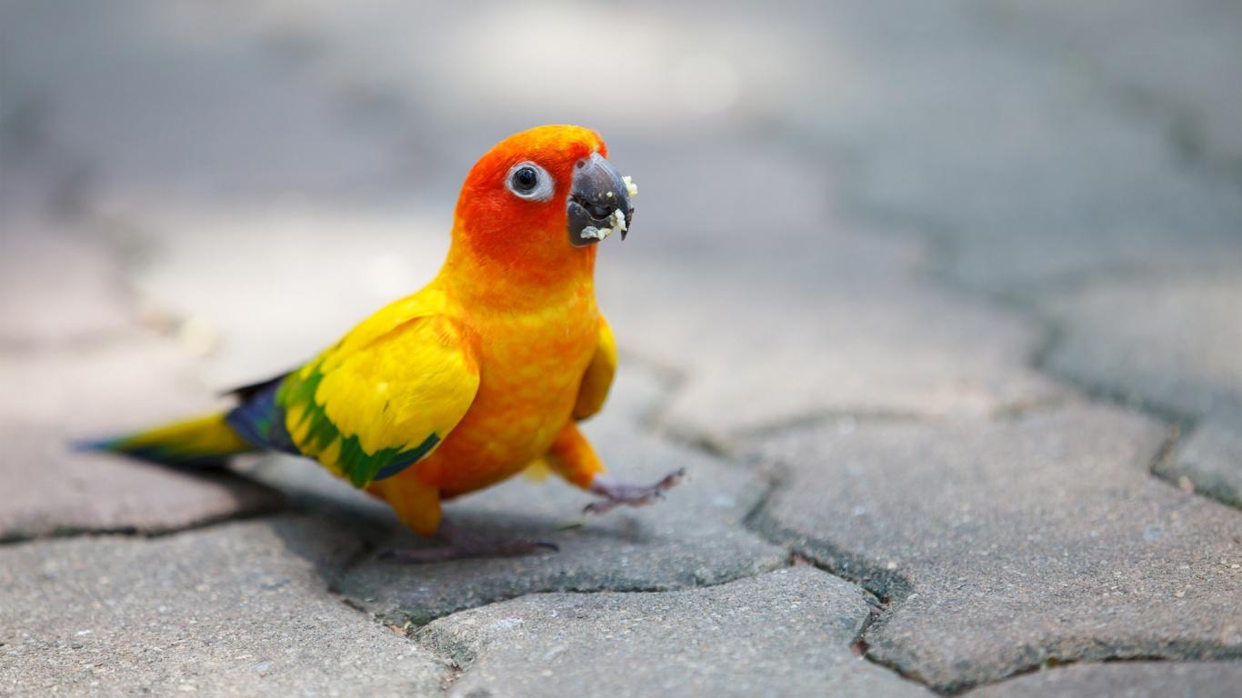 cute parrot wallpaper 19874