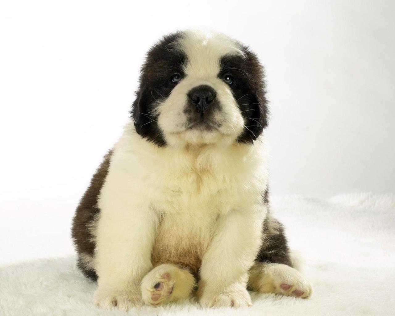 cute puppy 19965