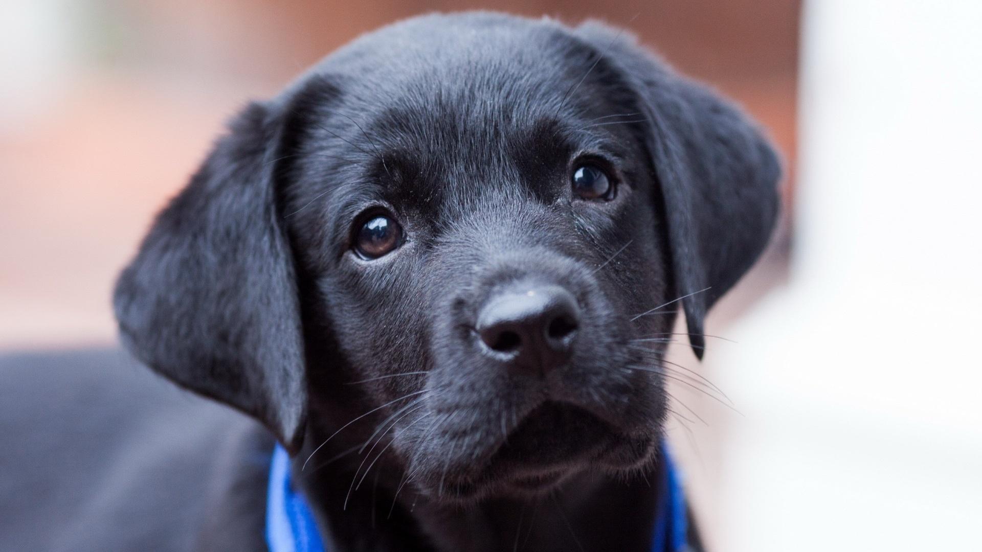 cute puppy 19967