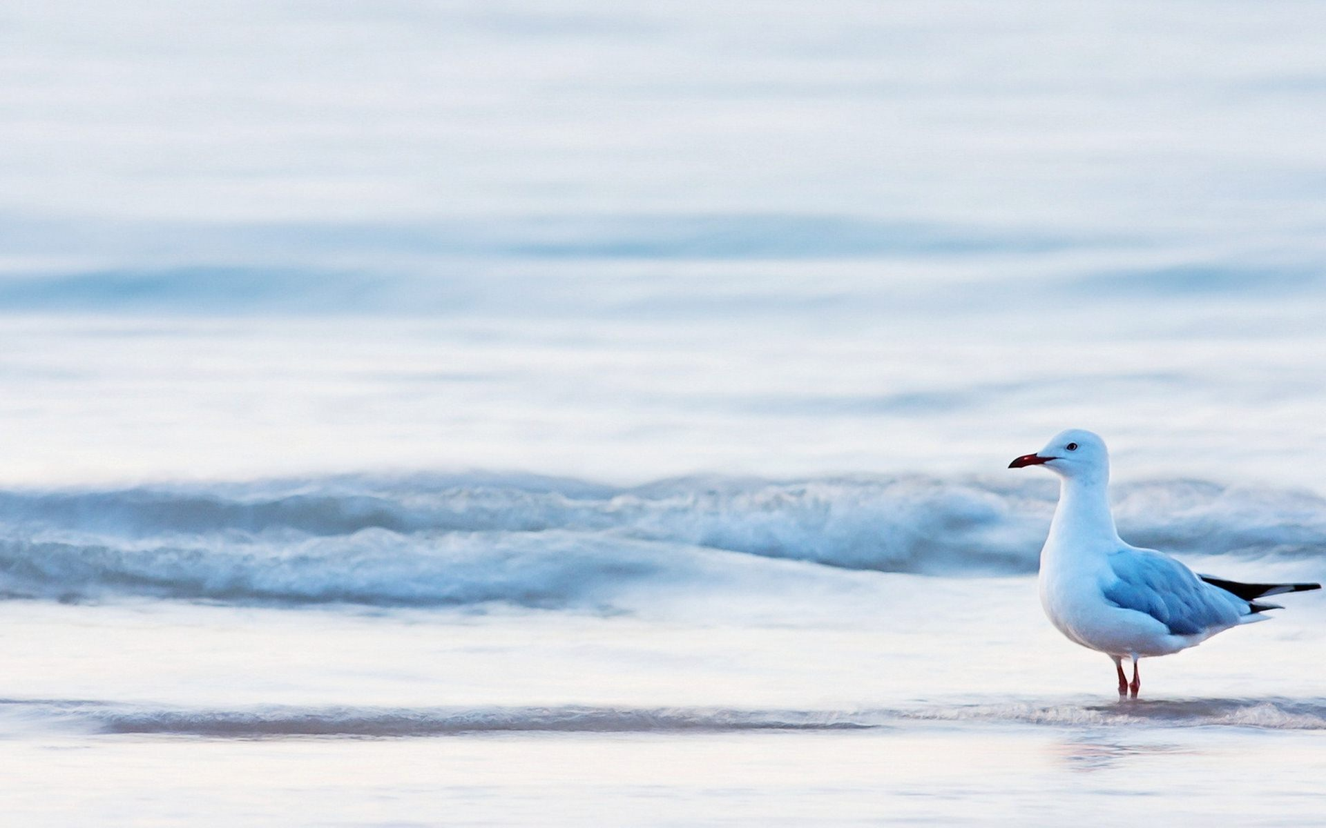 cute seagulls wallpaper 30690