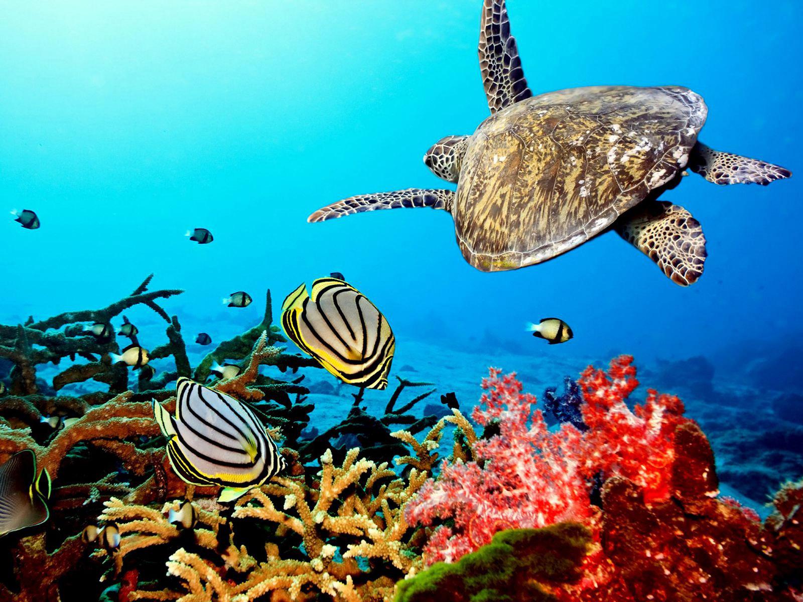 cute turtle 22671