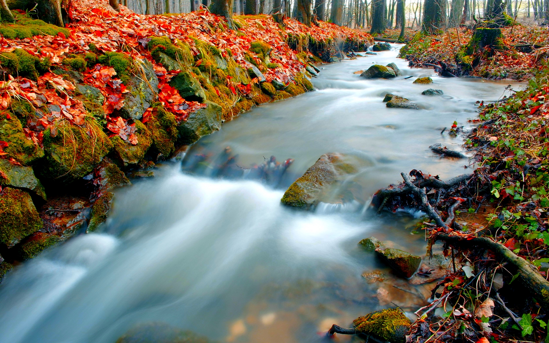 fantastic forest stream wallpaper 34451