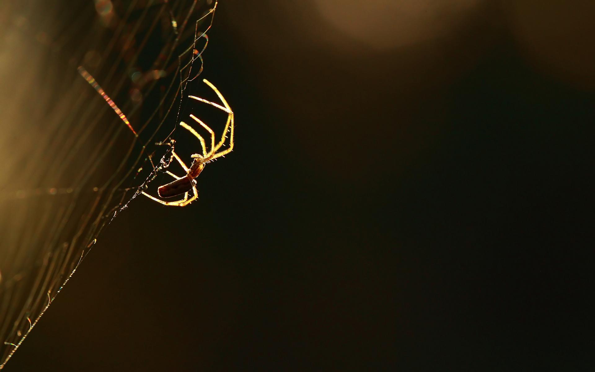 fantastic spider web wallpaper 41568