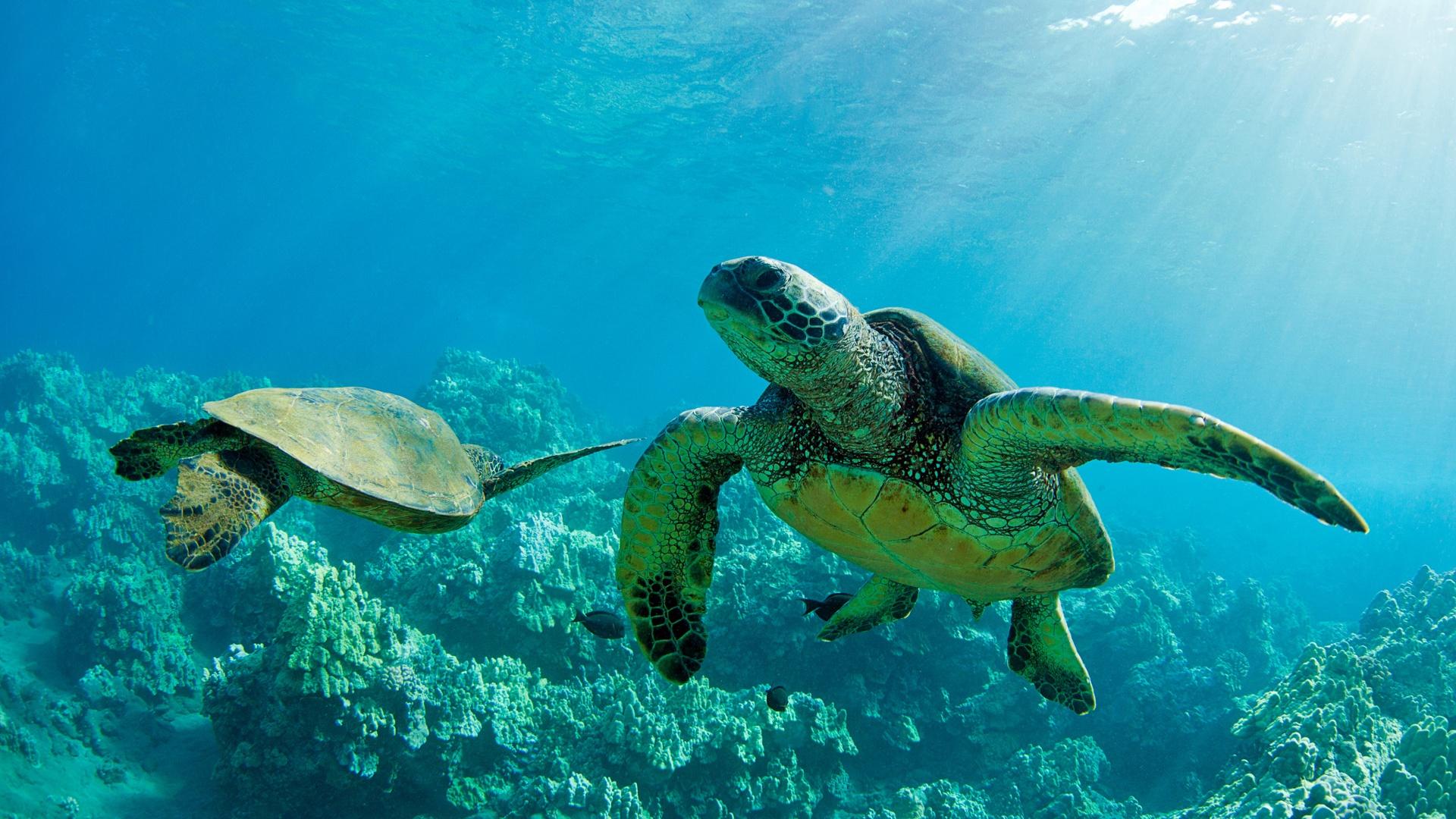 fantastic turtle wallpaper 41457
