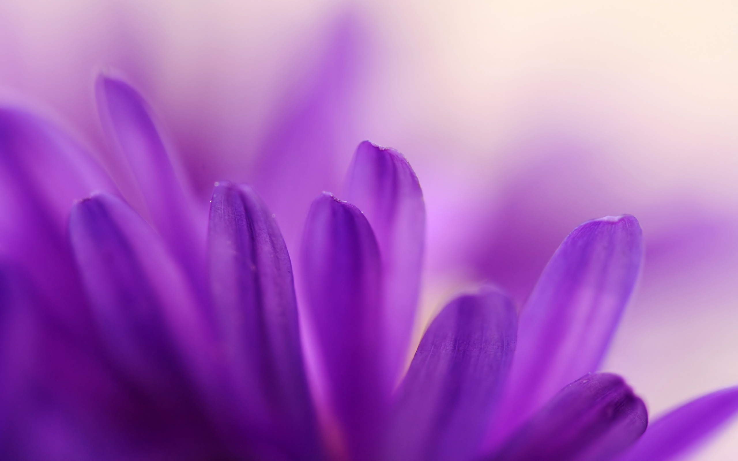 flower petal 25873