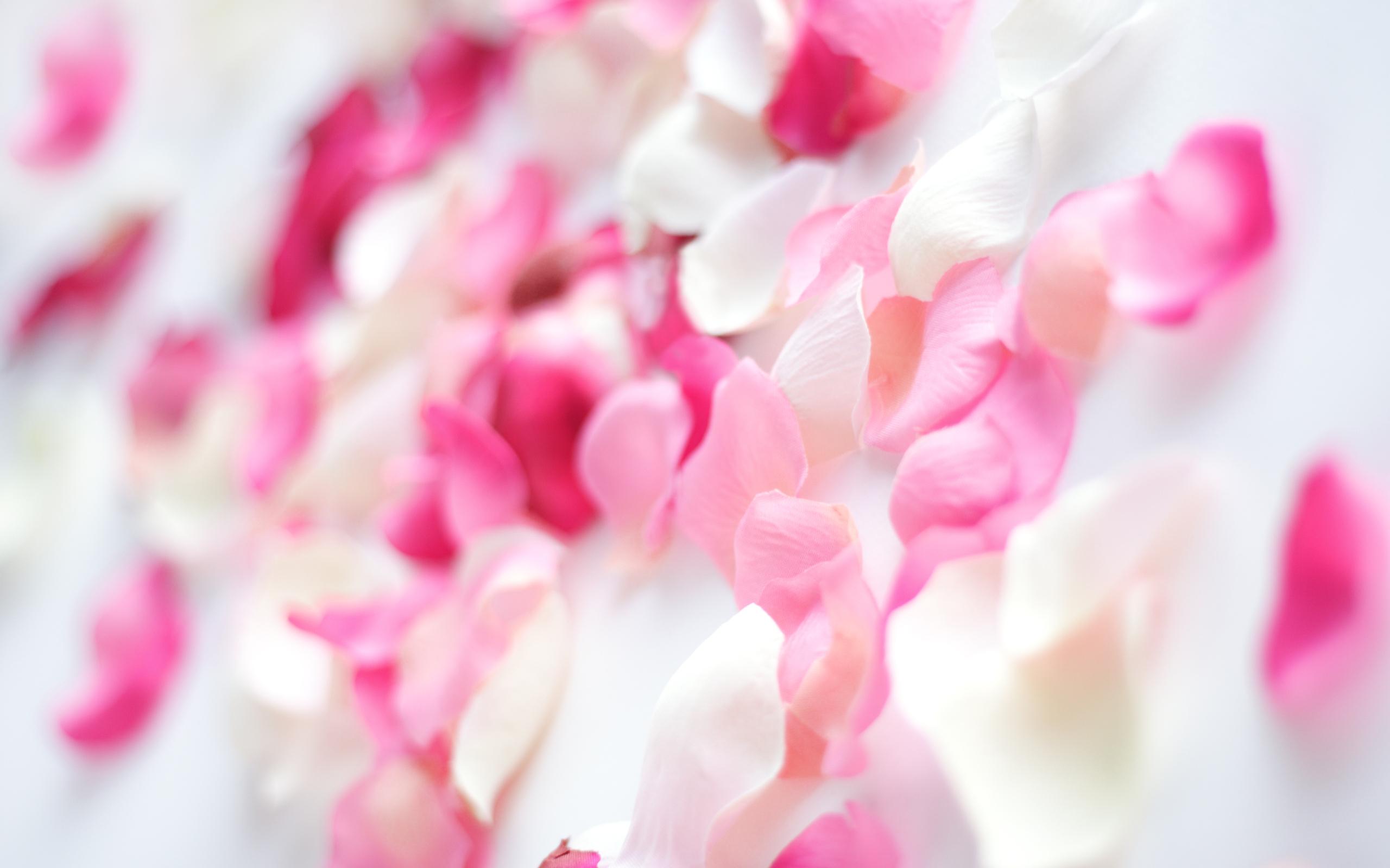 flower petal images 25891