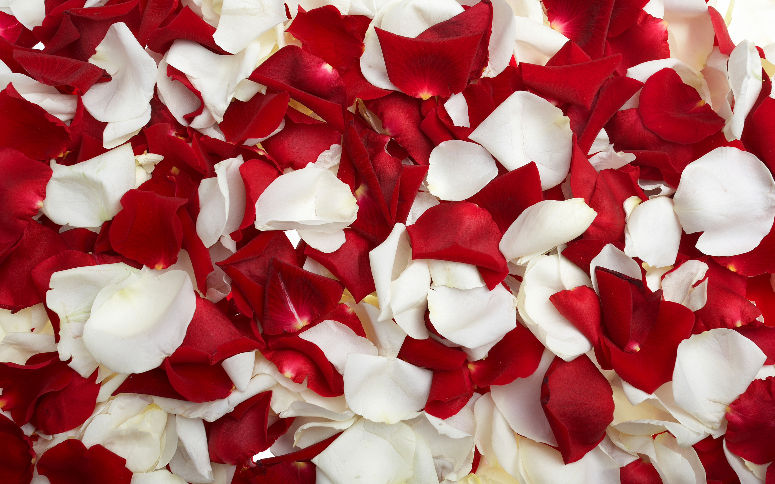 flower petal wallpaper 25884