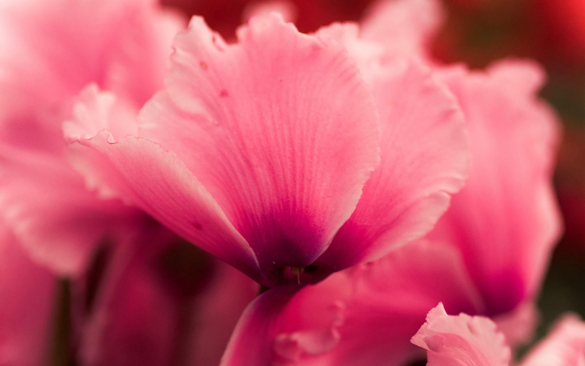 flower petals 25869