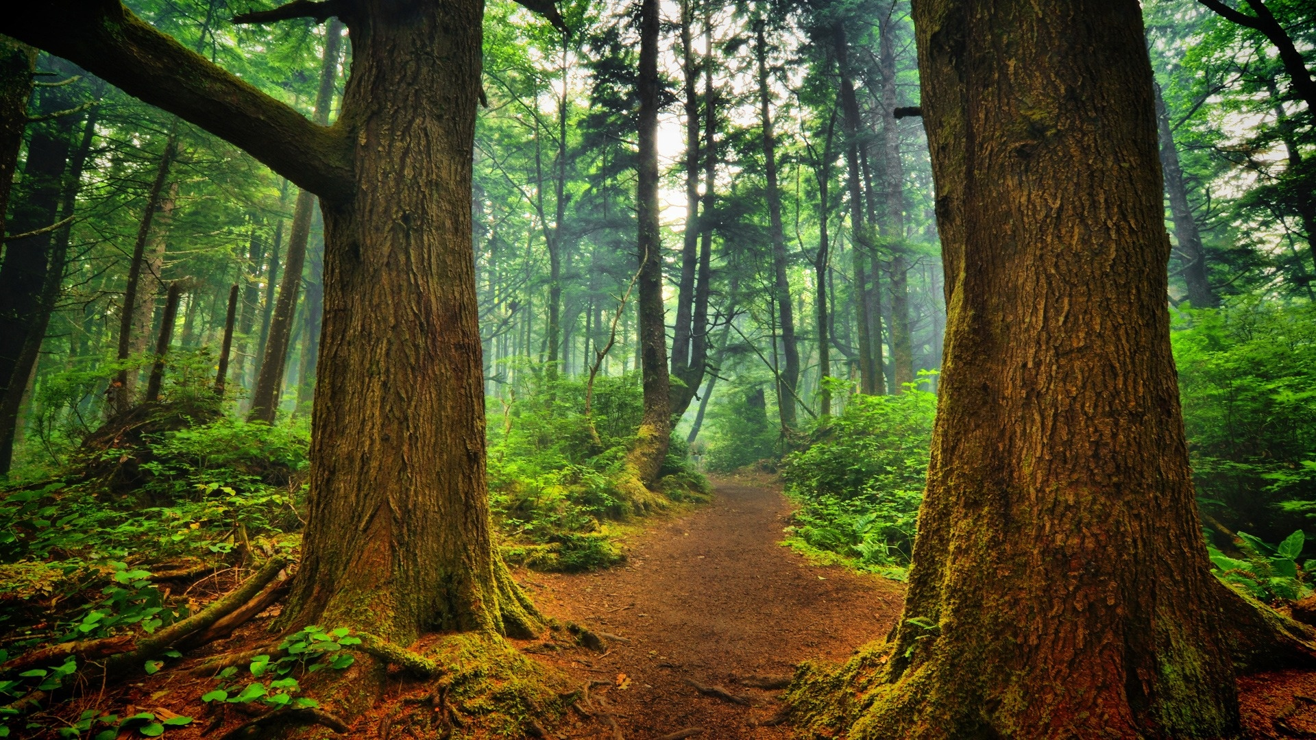 forest path wallpaper 32564