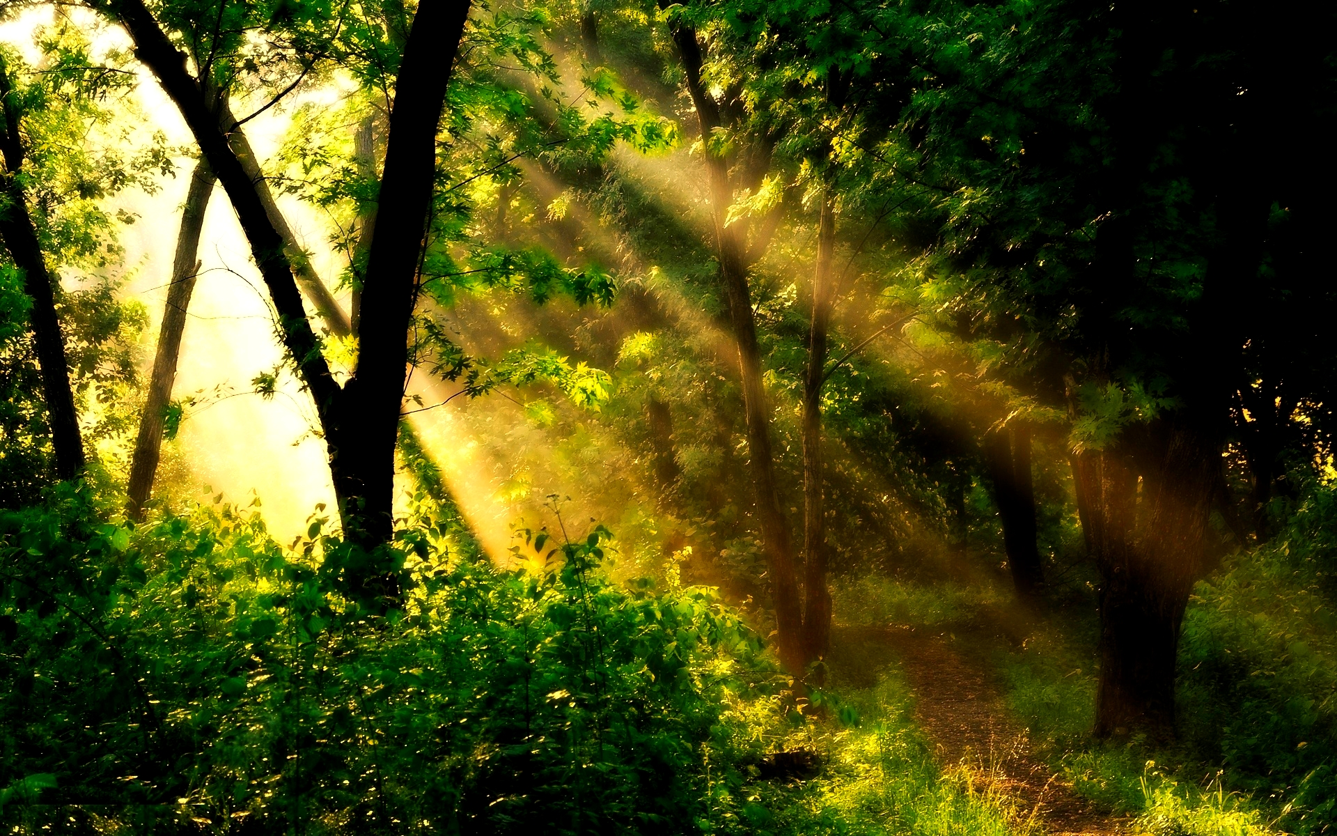 forest sun background 33426