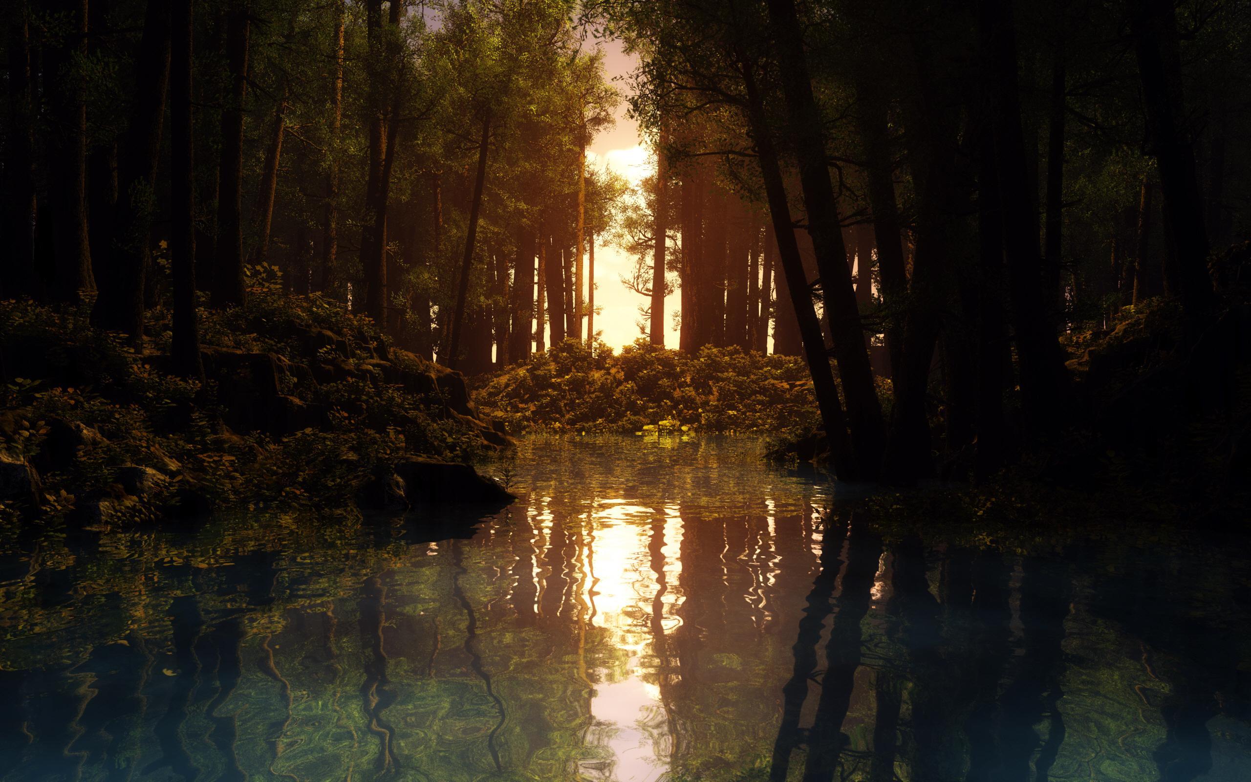 forest sun wallpaper 33419