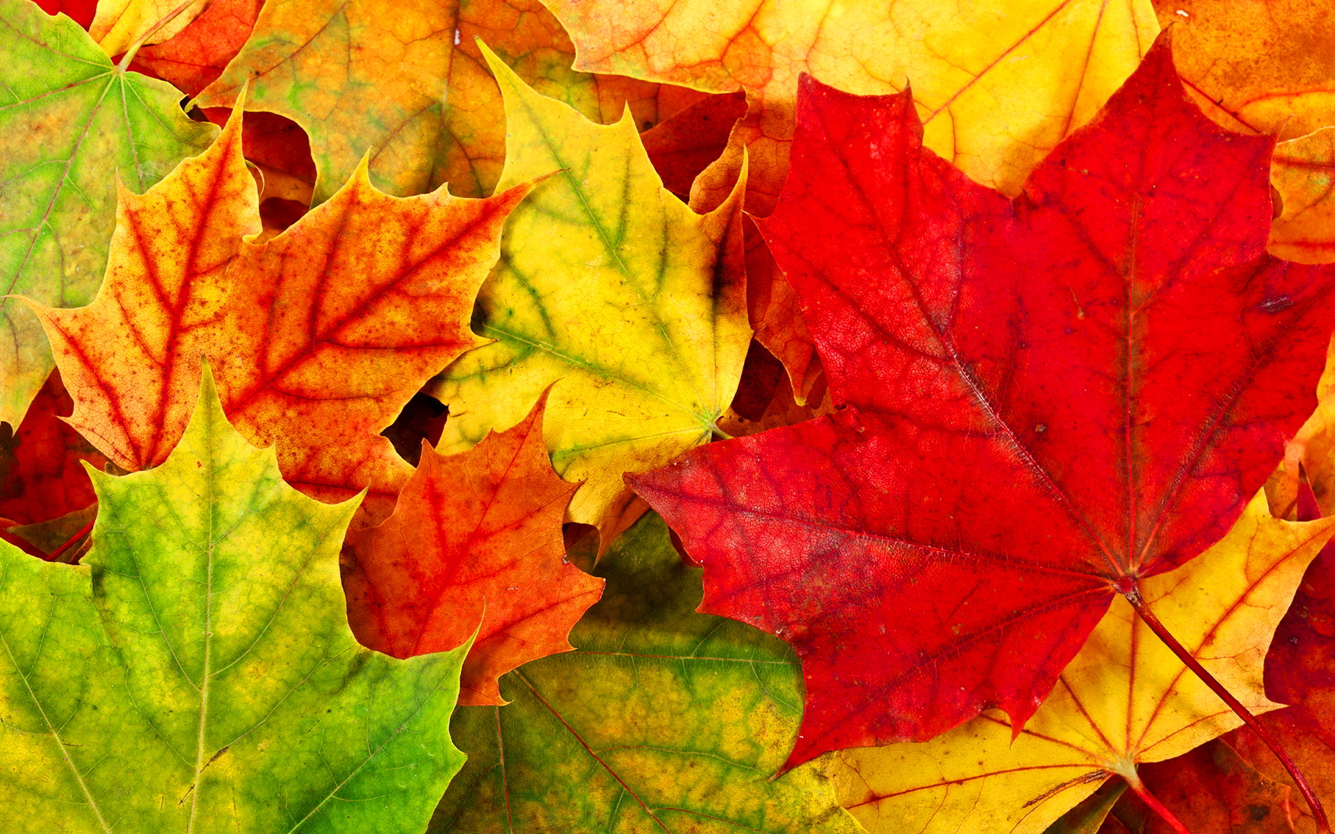 free colorful leaves wallpaper 30080