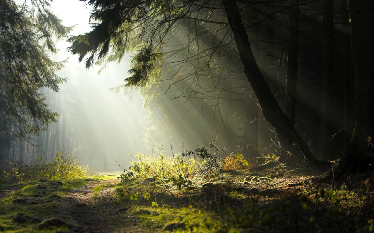 Morning Sun Rays Forest ? 4K HD Desktop Wallpaper for 4K Ultra HD ...