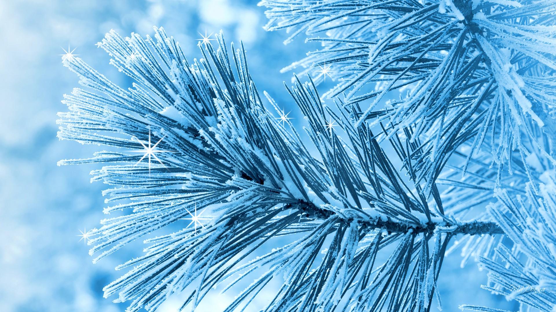 free pine wallpaper 31440