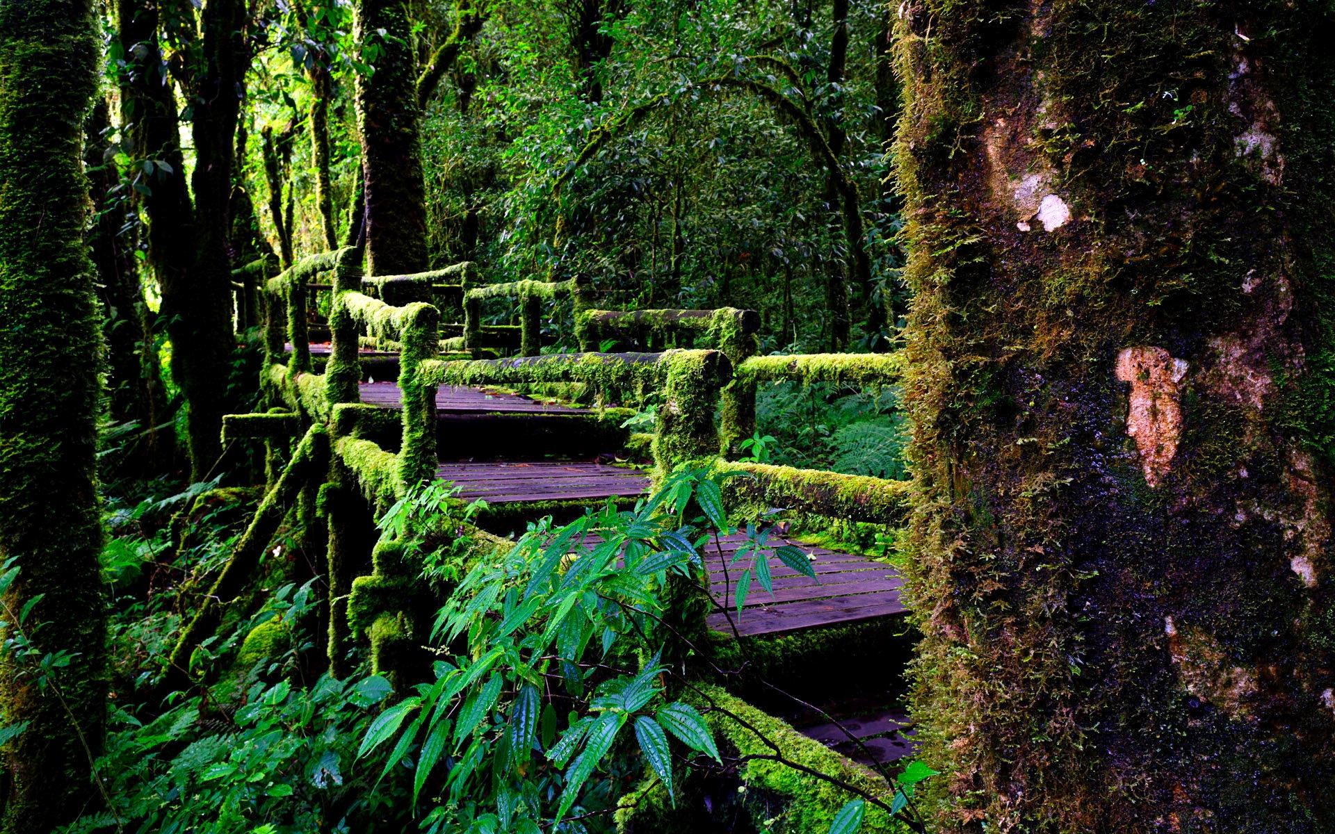 free rainforest wallpaper 24476