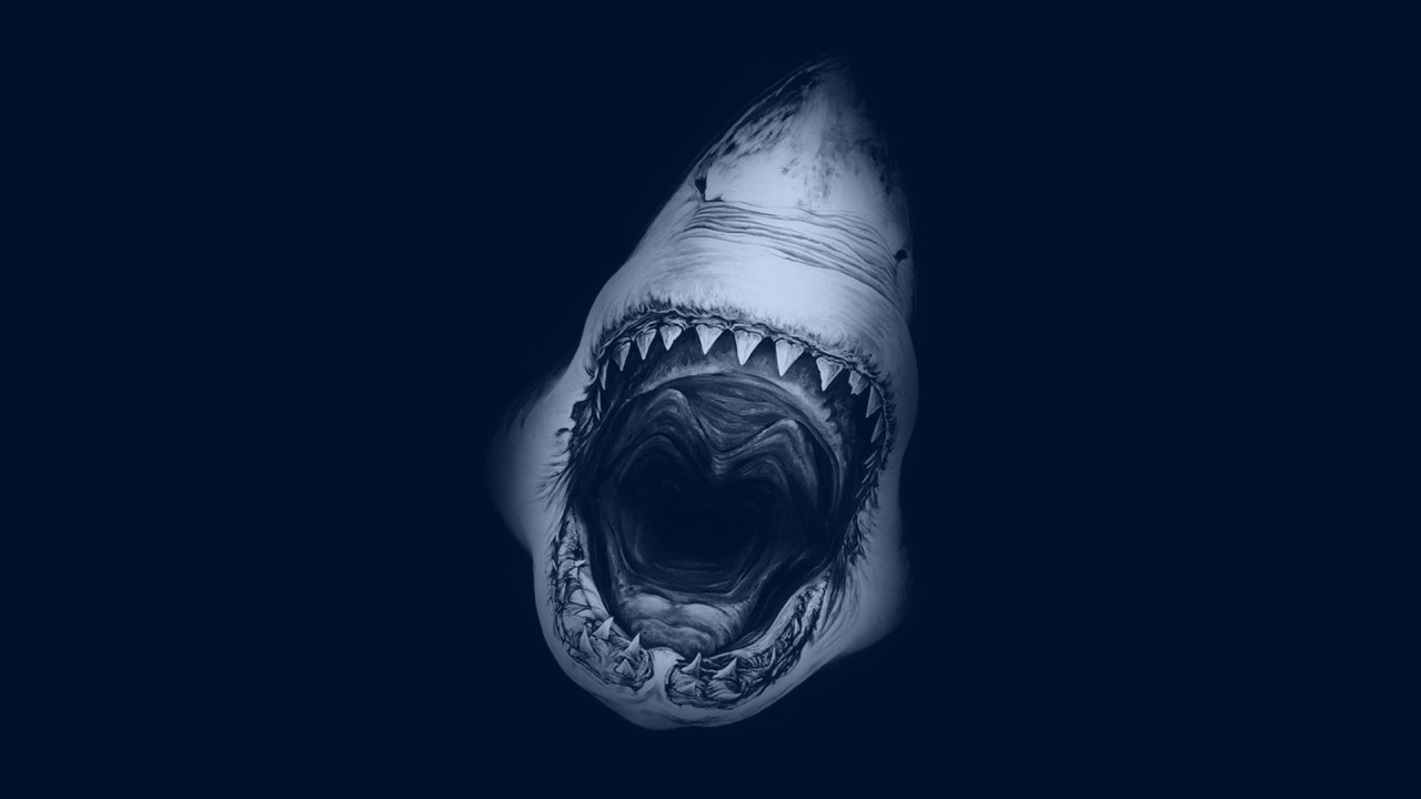 free shark wallpaper 23661